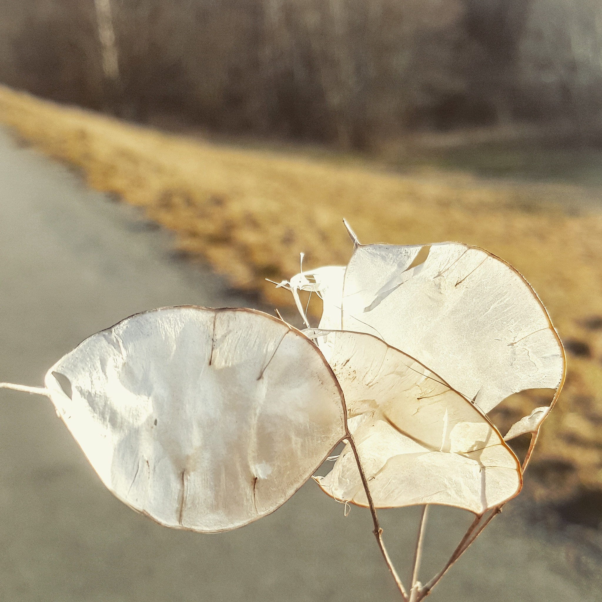 Untitled by Sandra Tiroler