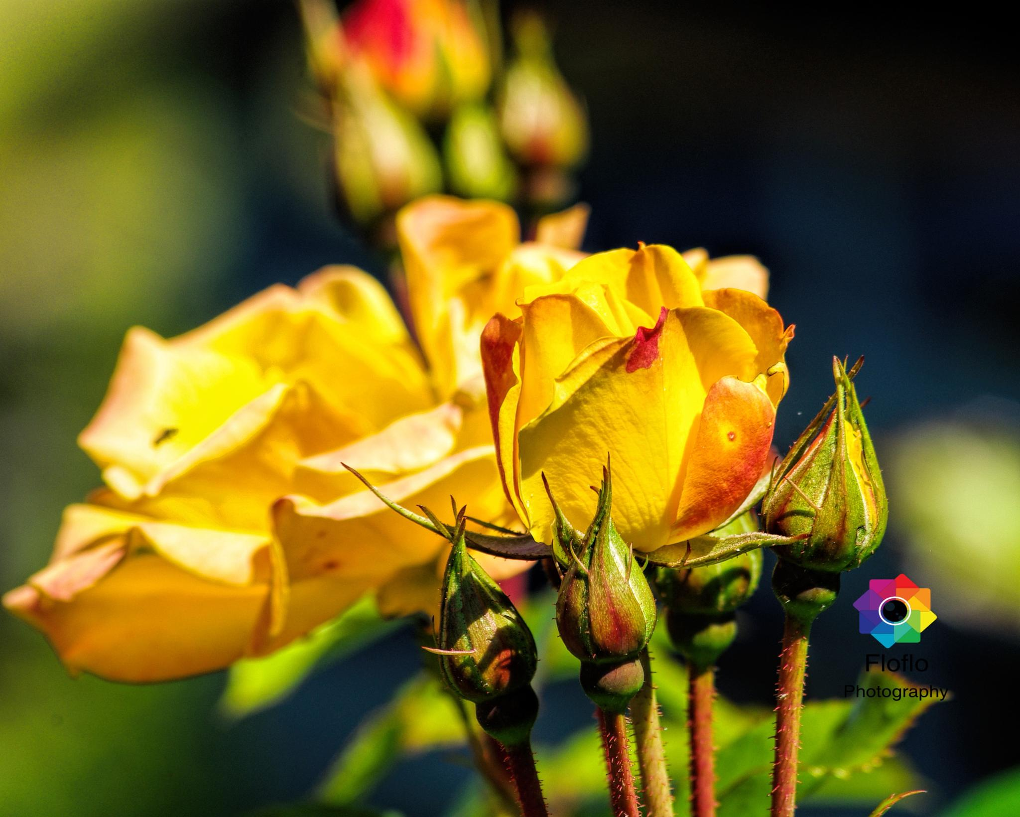 Yellow in a way... by Florentina M D