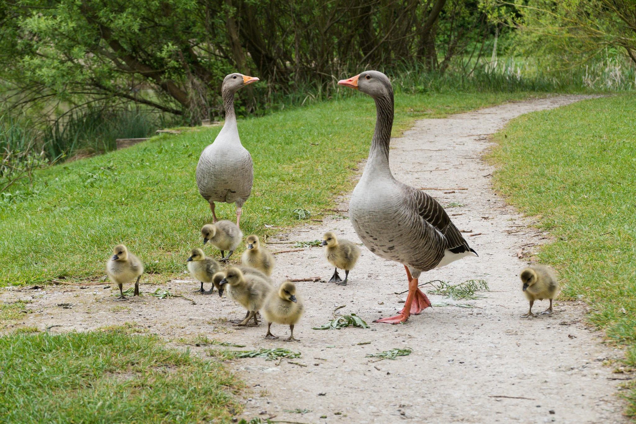 Family Stroll by Peter Suggitt