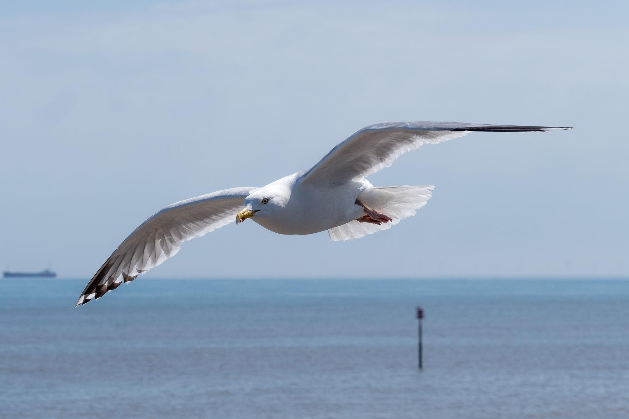 Gliding by Peter Suggitt
