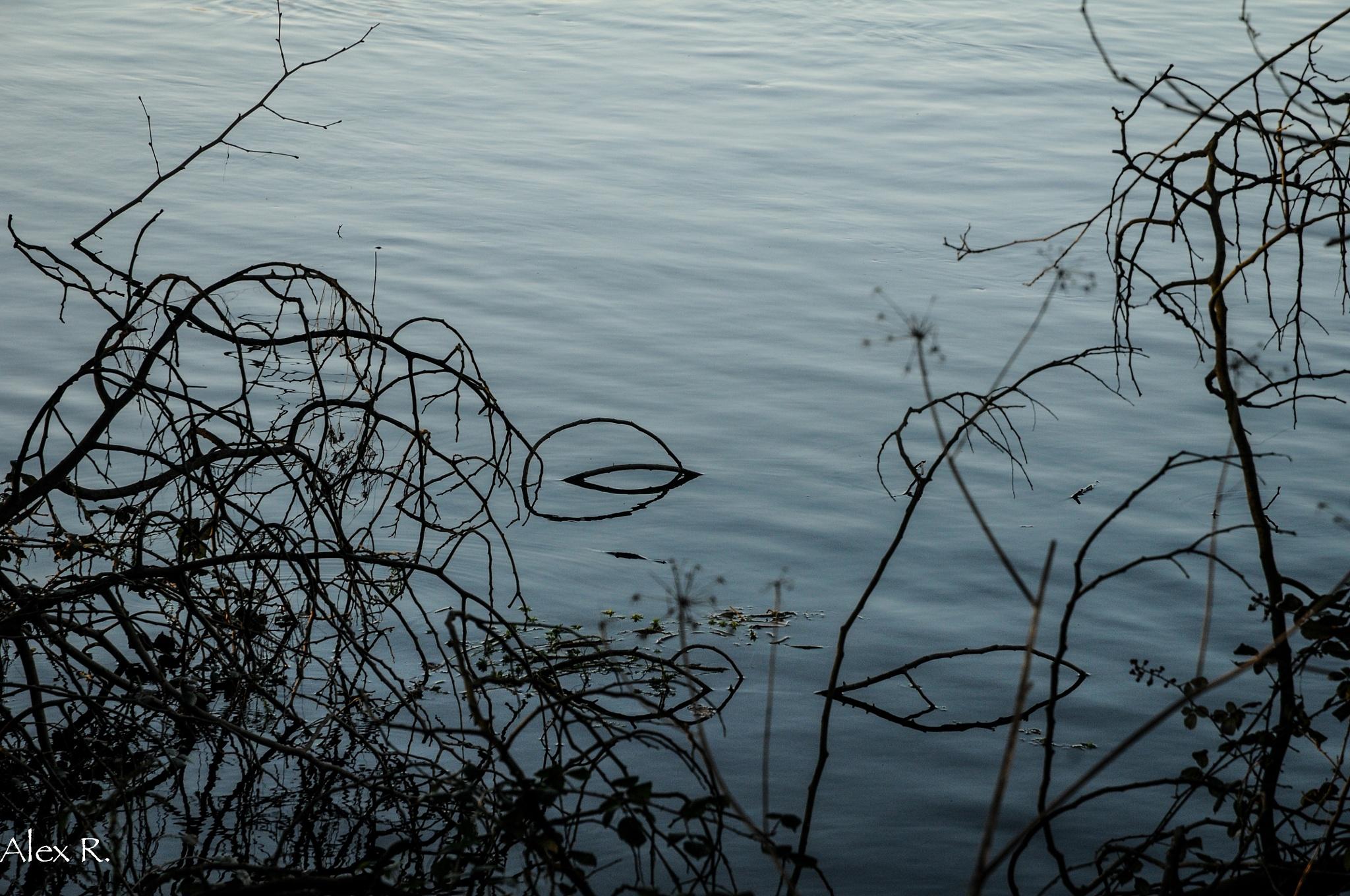 shadows & reflections by Alex Rocio