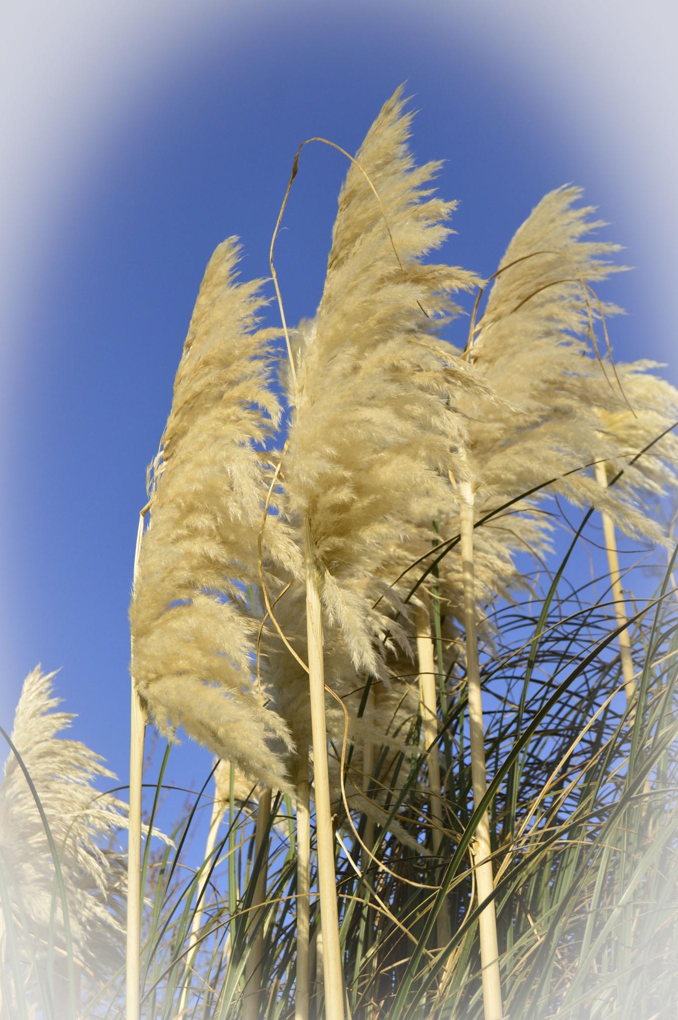 Grasses by John White