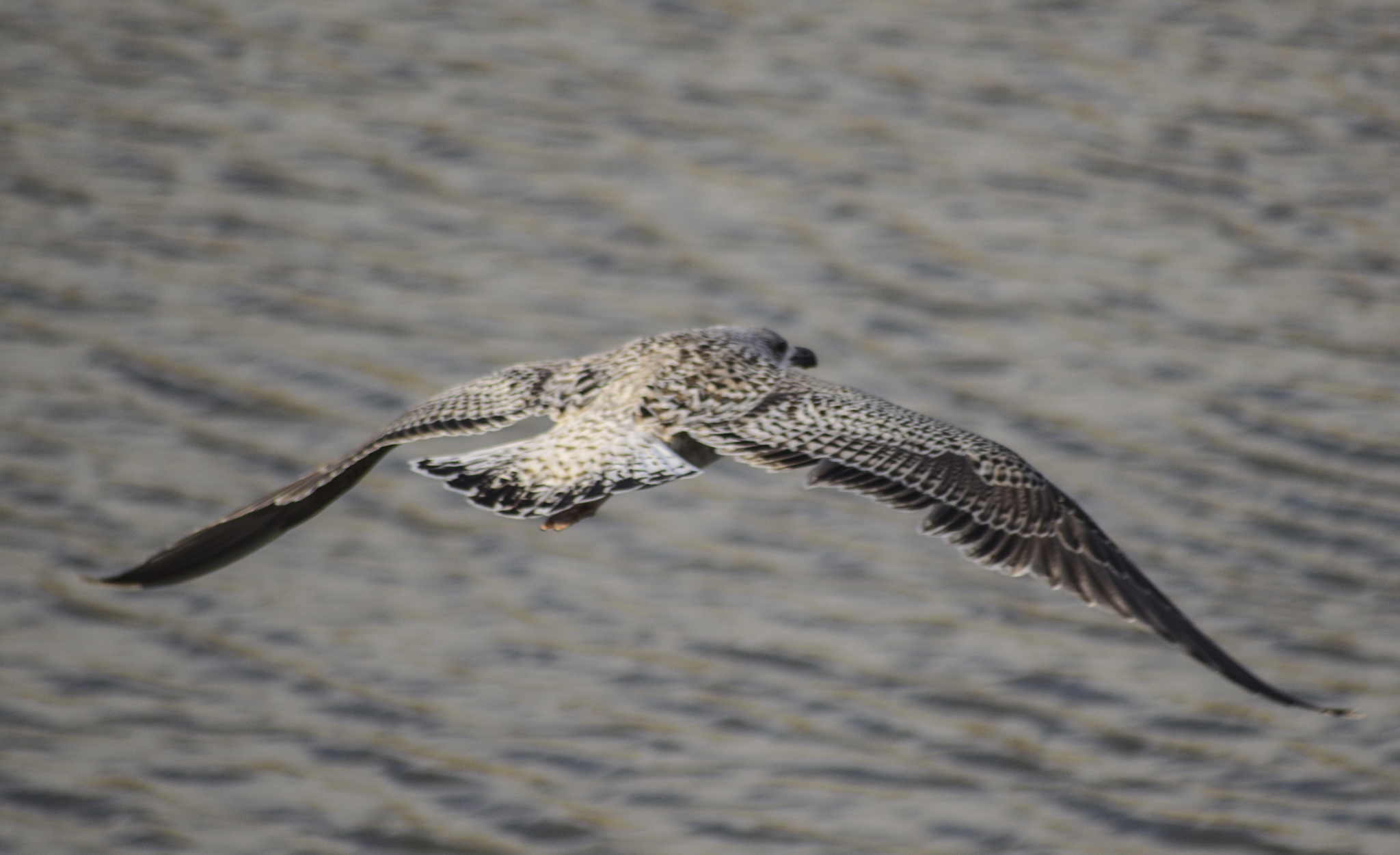 Taking flight by John White