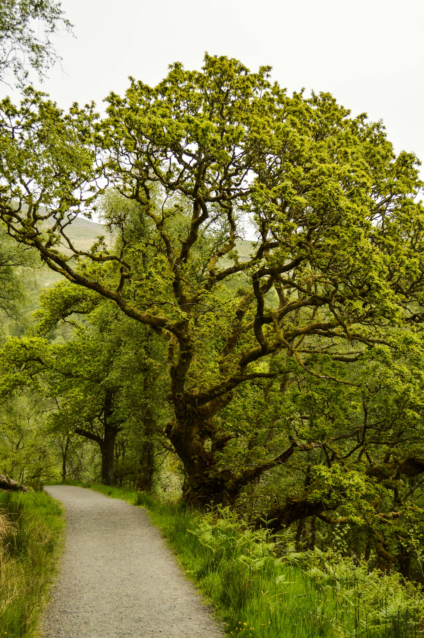 Photo in Nature #tree #path #nature