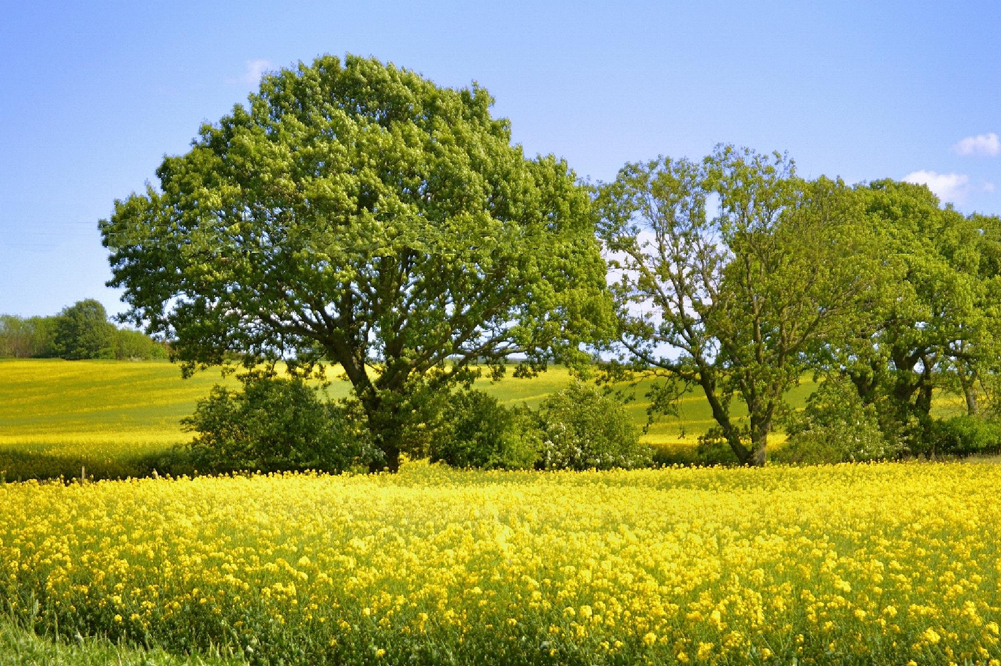 Green and yellow by John White