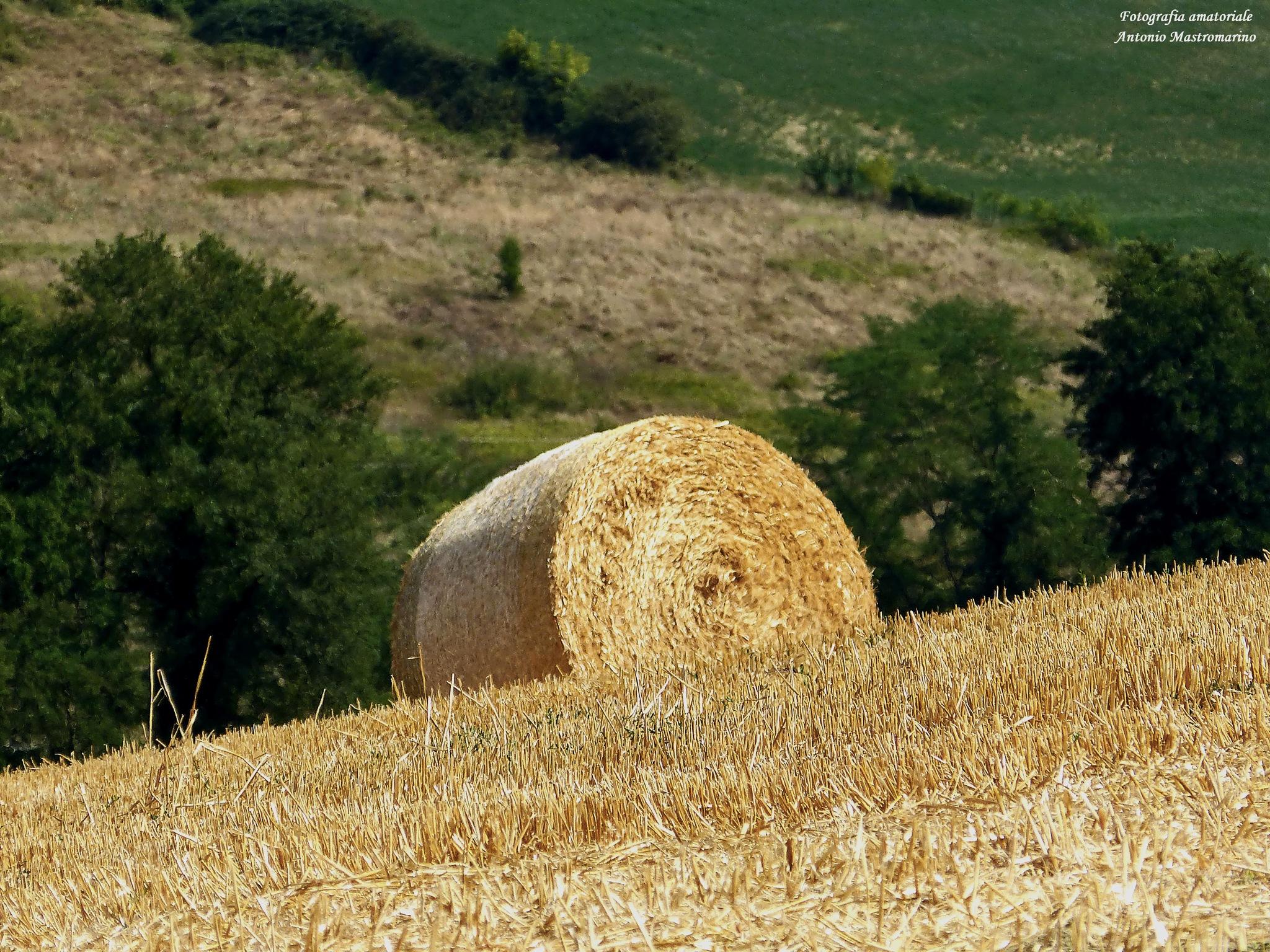 #mugello #grezzano #natura #toscana by antonio mastromarino