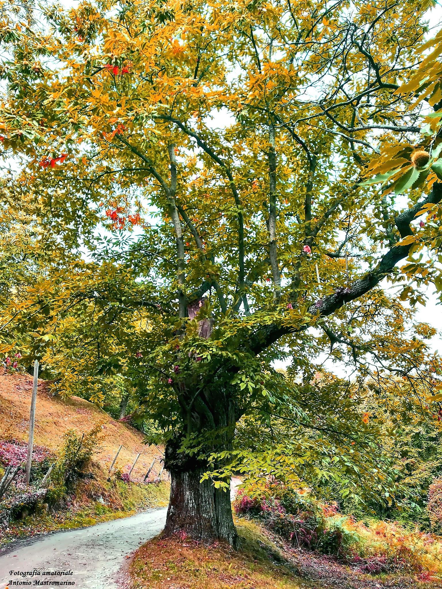 Autunno Autumn by antonio mastromarino