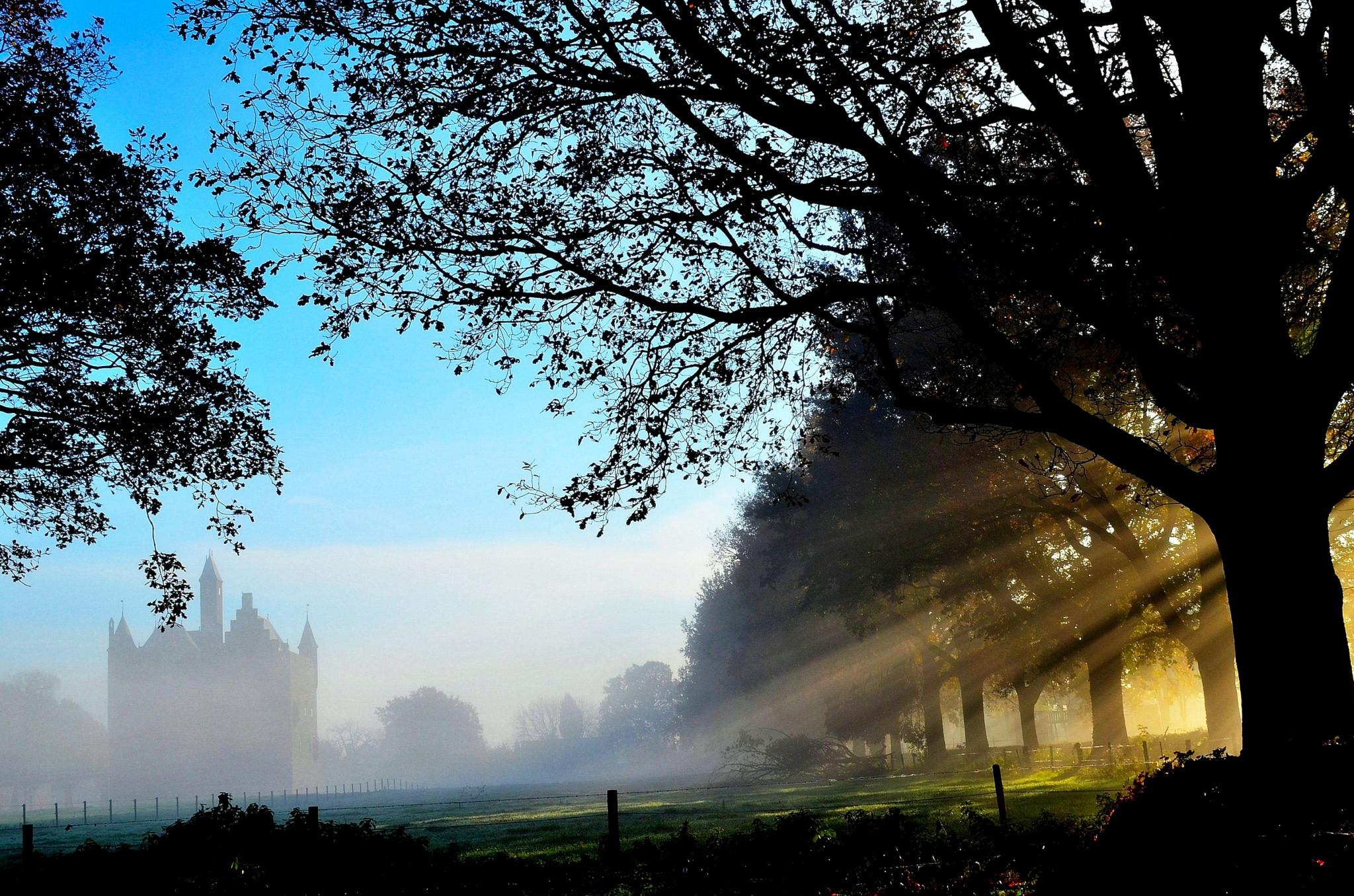 Goodmorning sunshine by Joyce Derksen