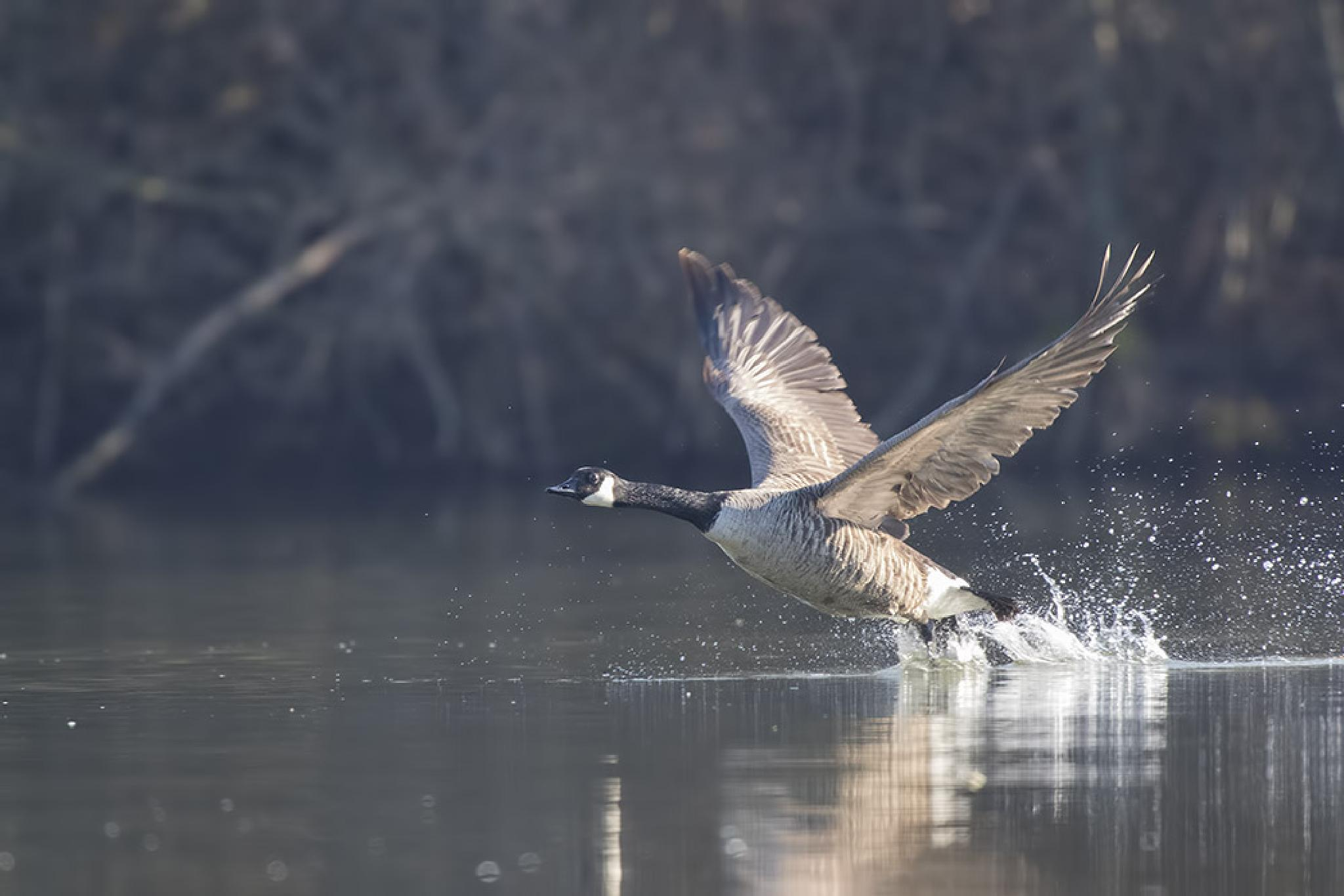 taking off by denis.keith