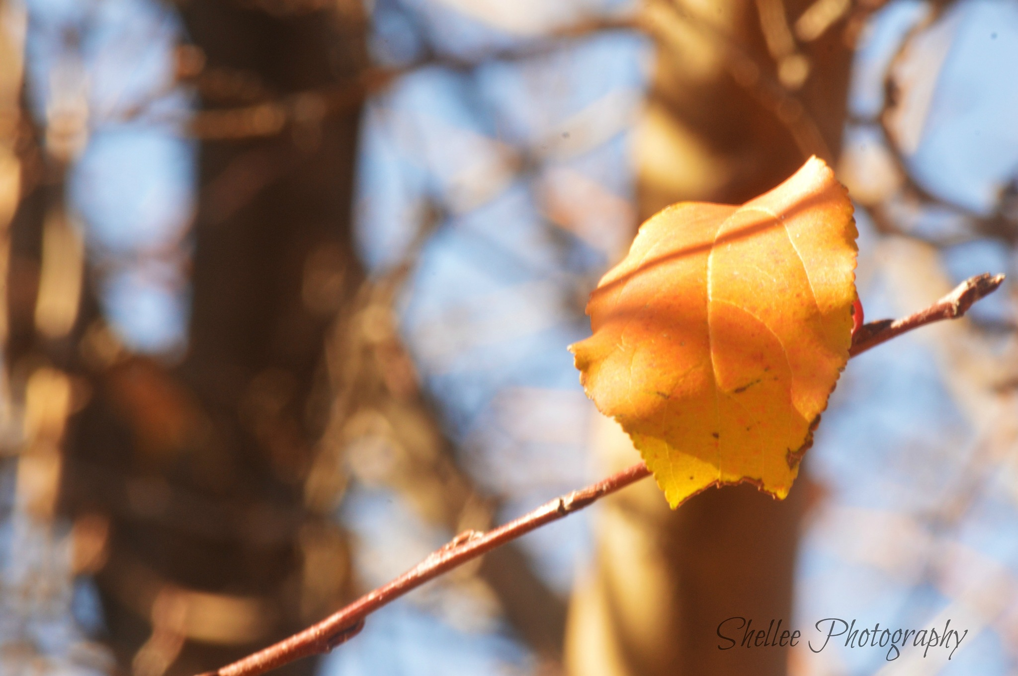 Last Sign of Fall by shellee