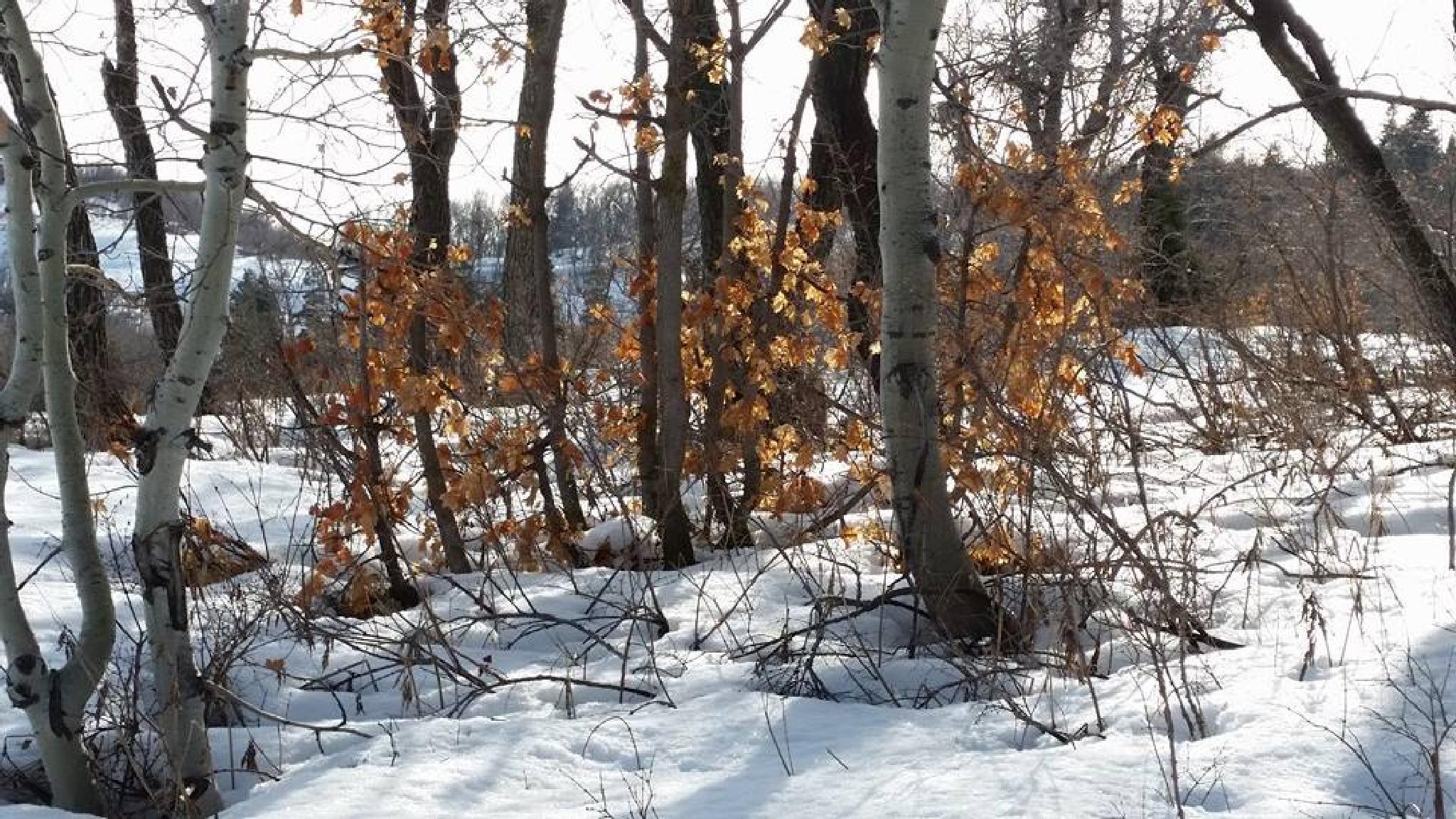 winter hike by shellee