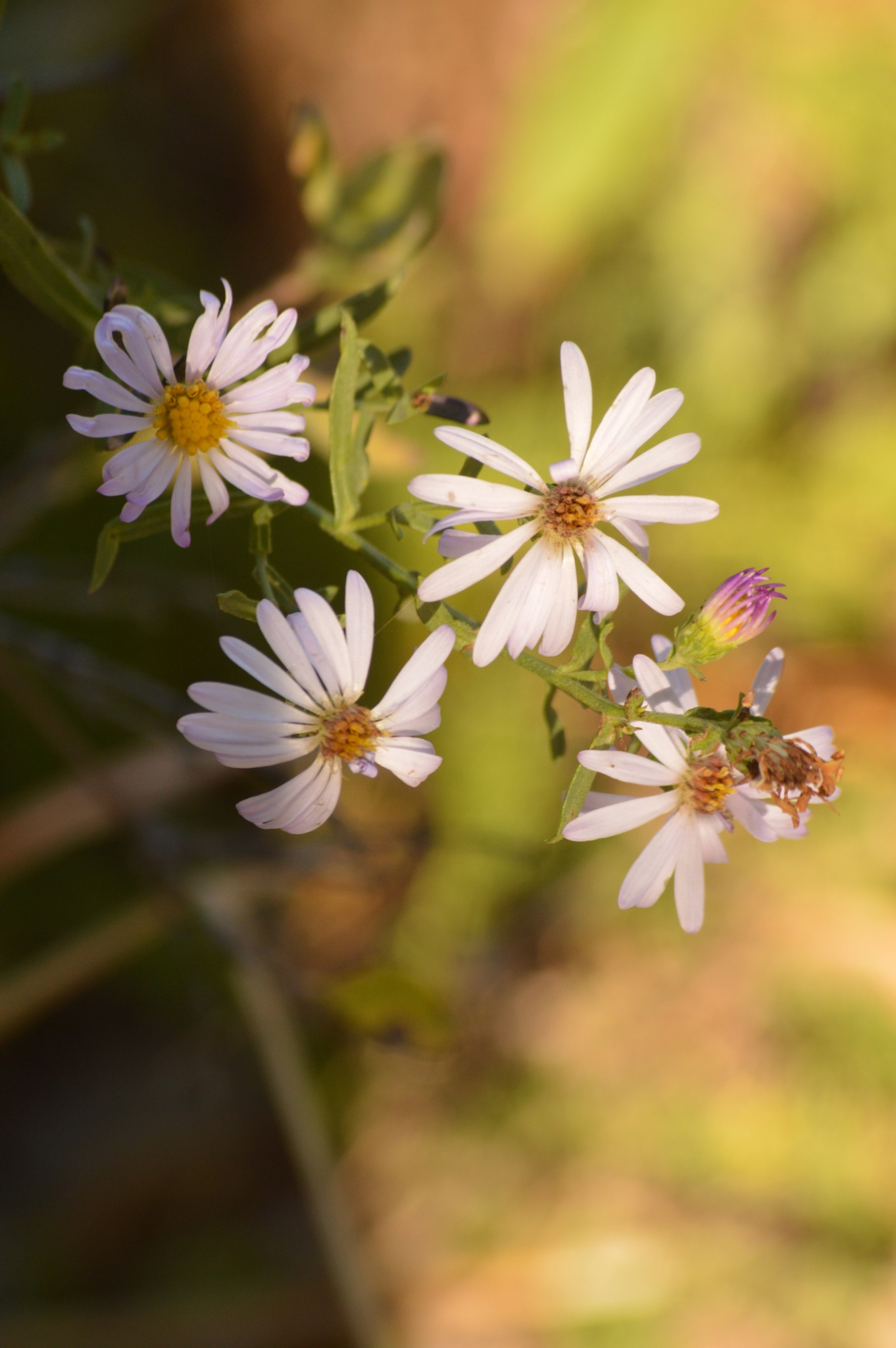 tiny flowers by shellee