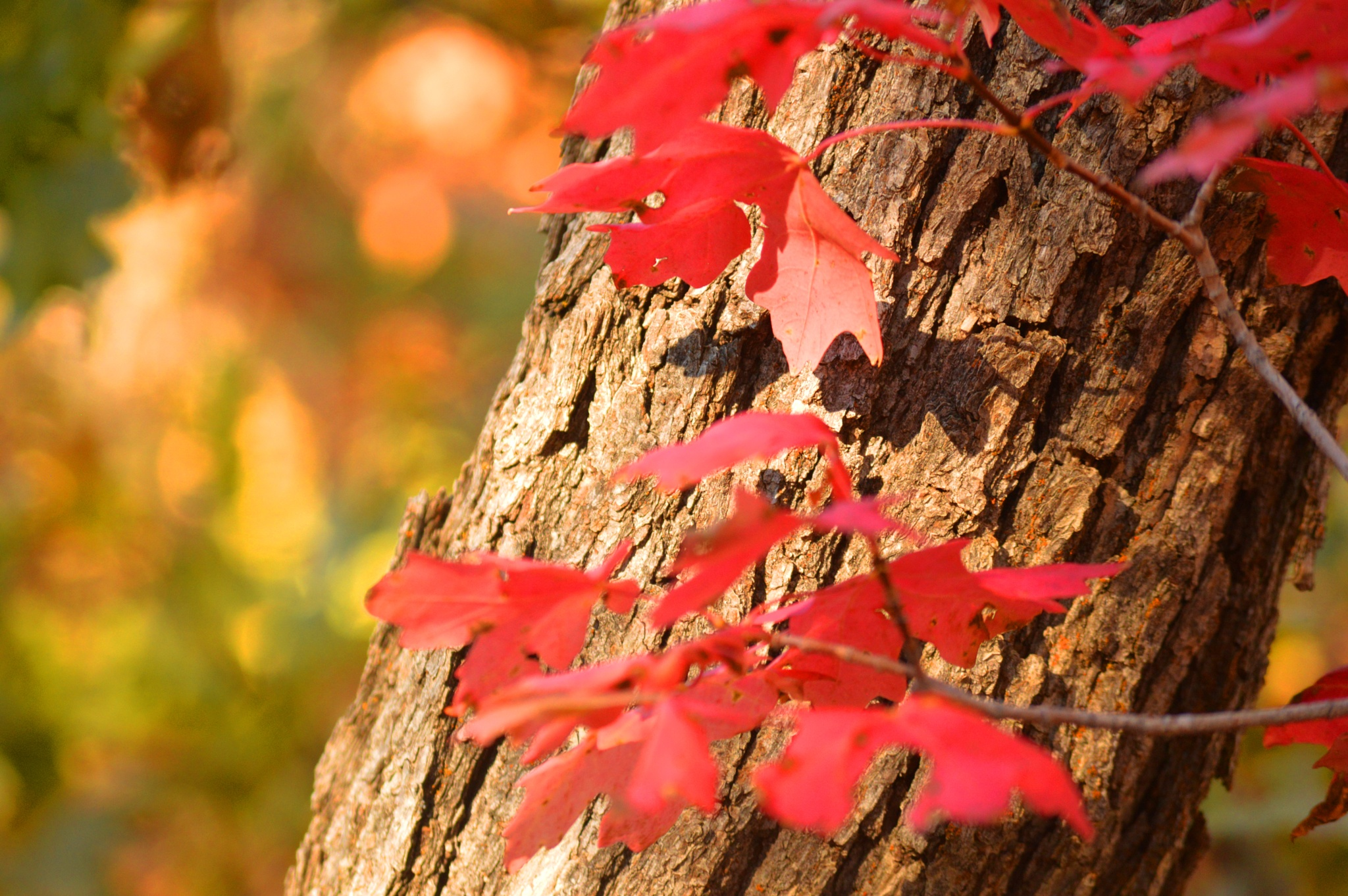 colorful leaves by shellee