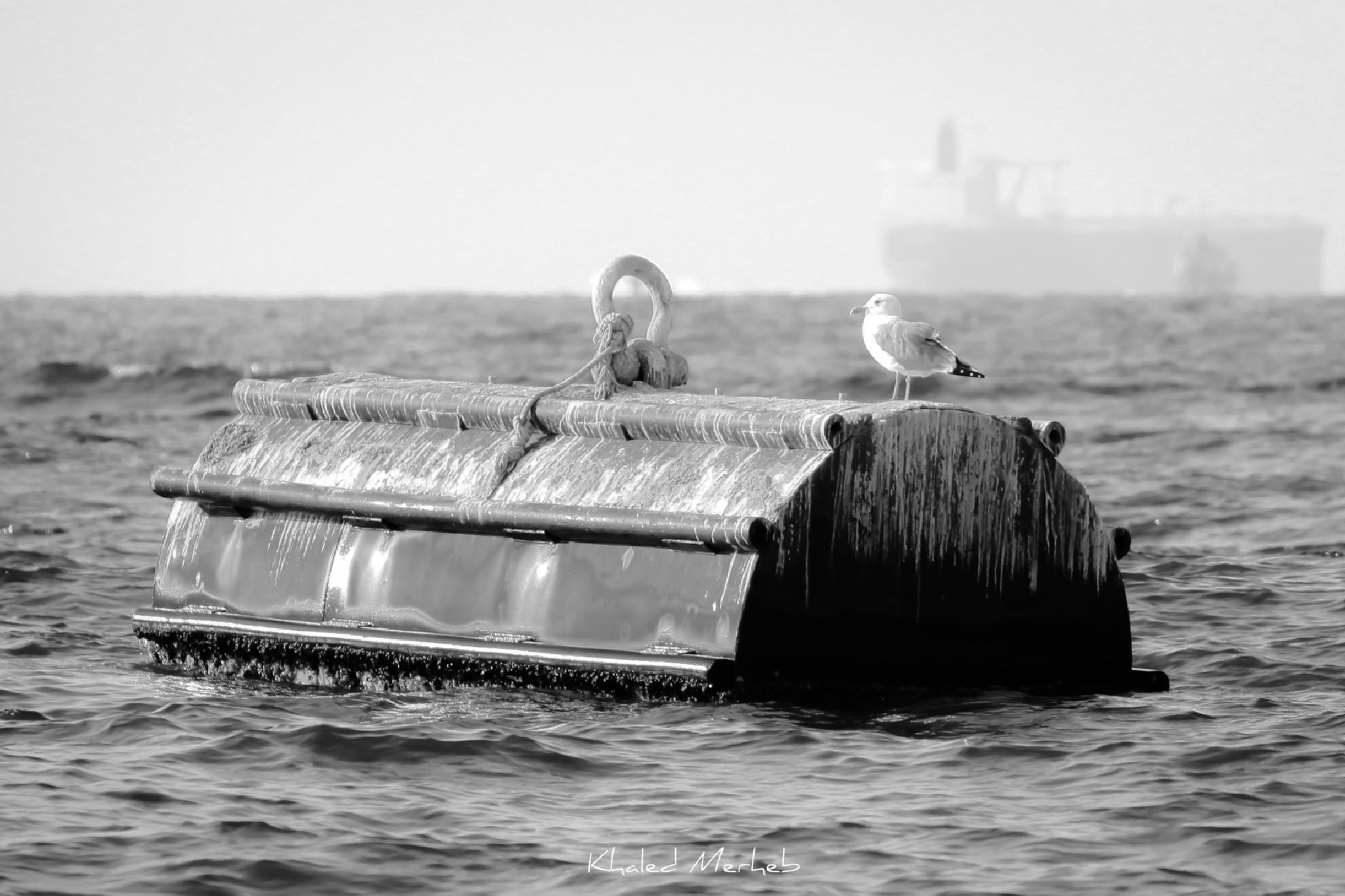 Let me take some rest.. by khaledMerheb