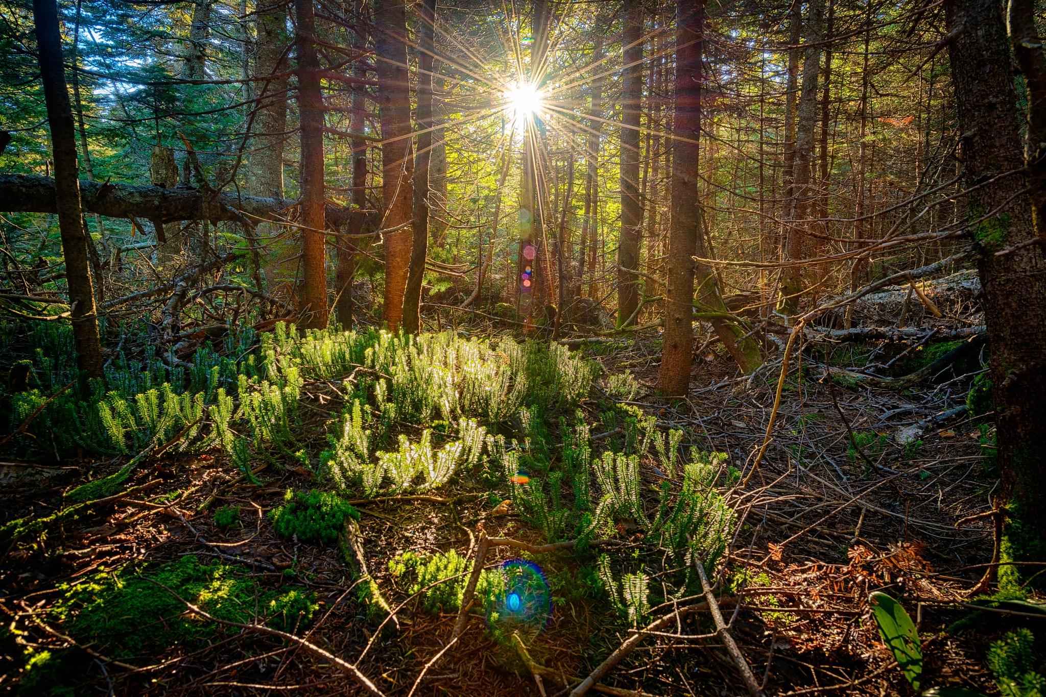 Early Morning Backcountry by Andrew Noiles