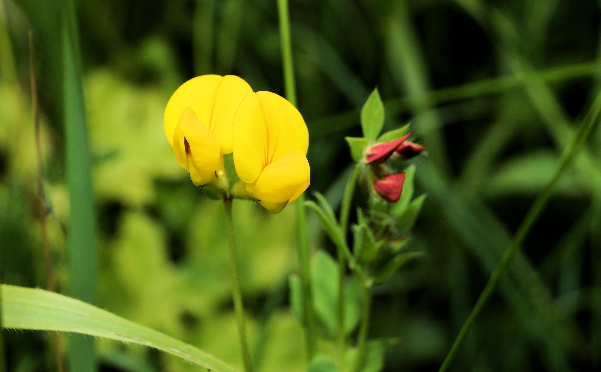 Wild flowers by Blue Beard