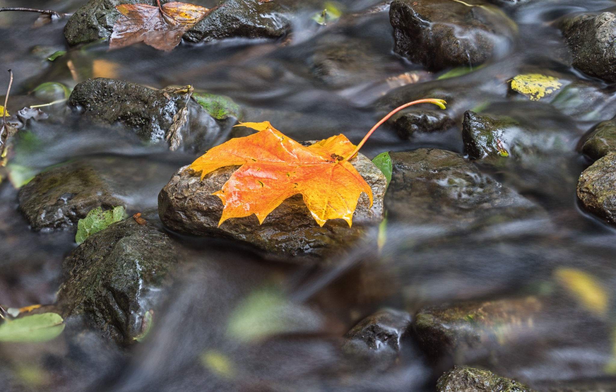 That Fall Feeling by Ray
