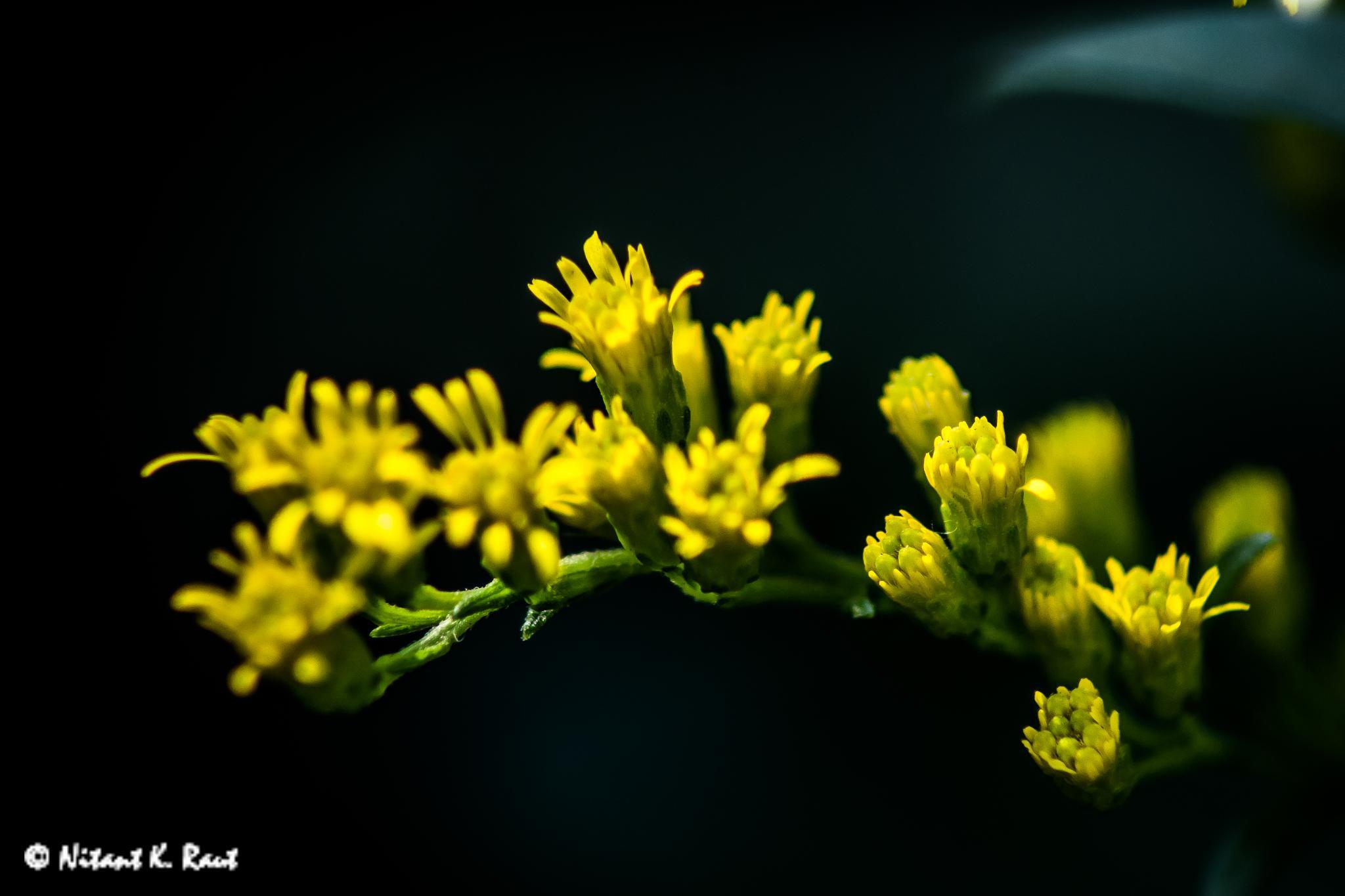 Flowers by Nitant K. Raut