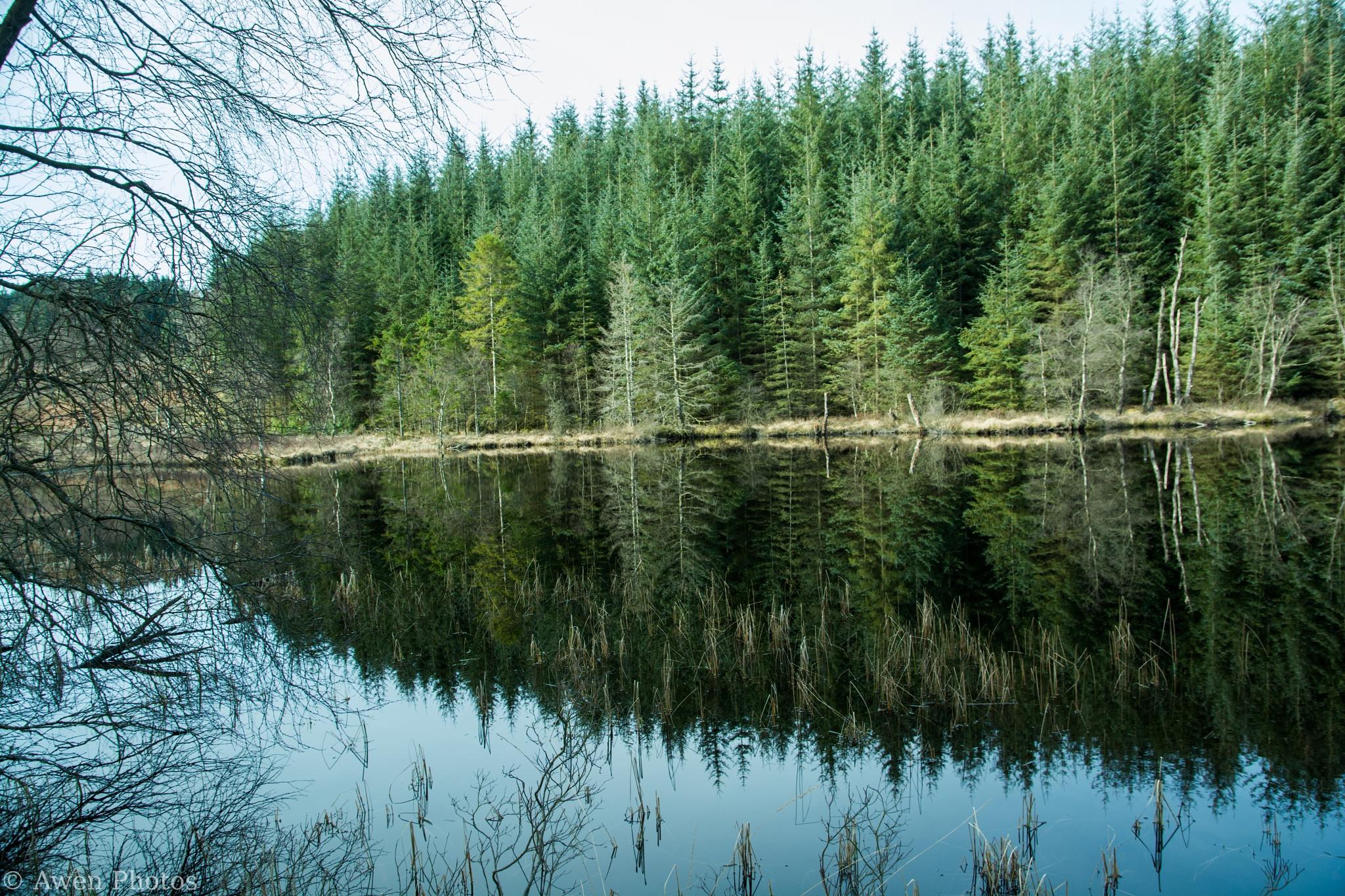 Scottish Reflections (1) by Neil Pitchford