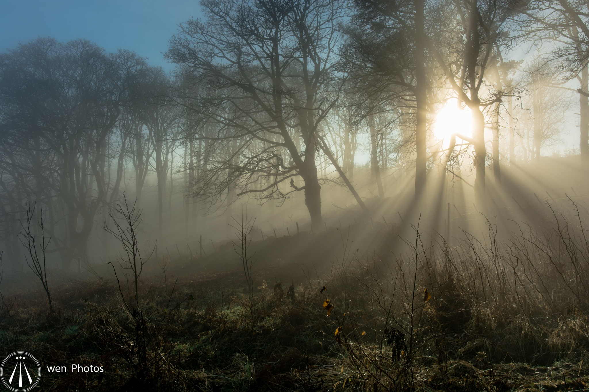Foggy day by Neil Pitchford