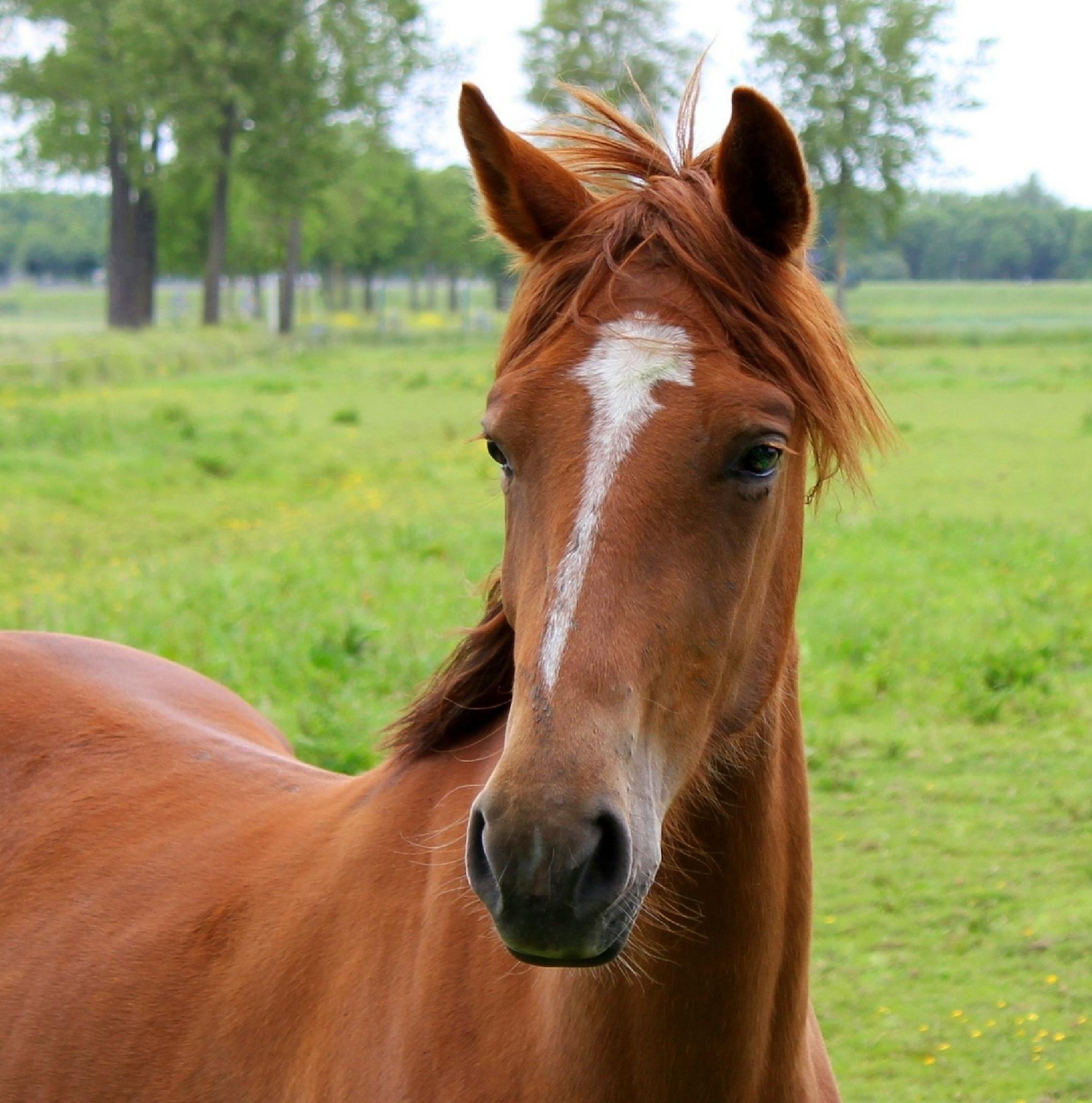 Horse by joselok05