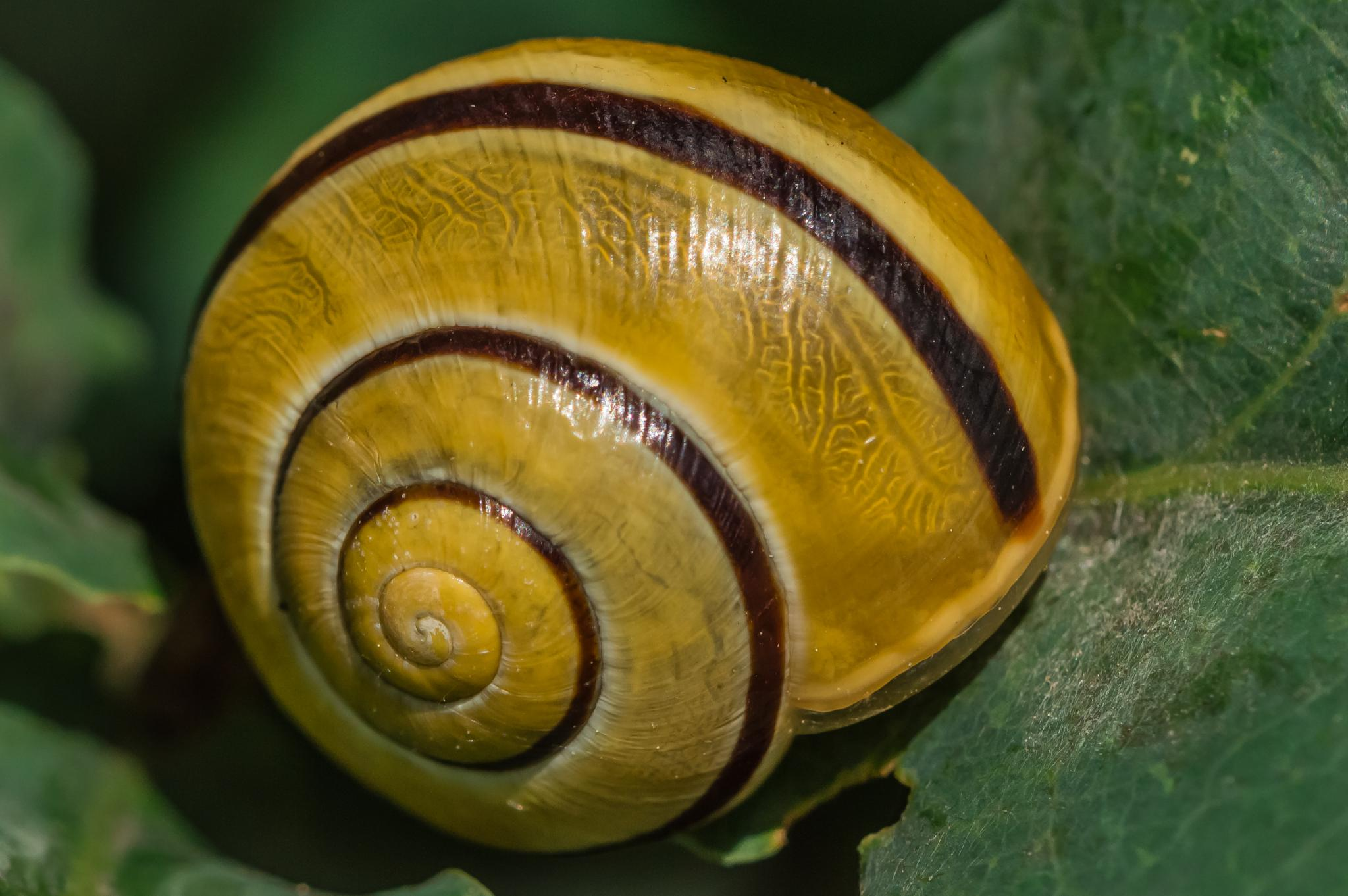 Photo in Macro #snail #animal #nature #macro #poland #nikon #d3200
