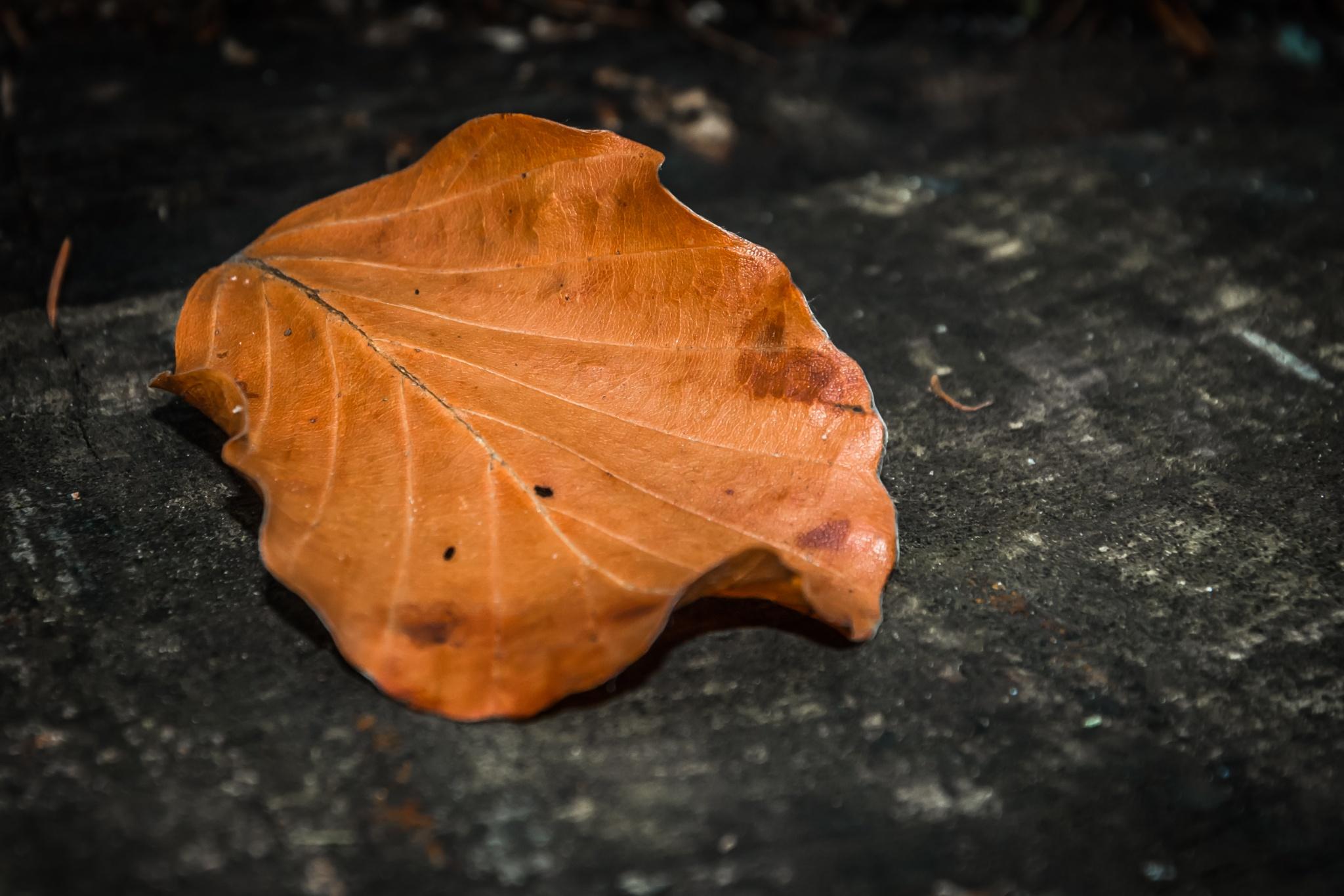 Autumn leaf by Tomasz Kosidło