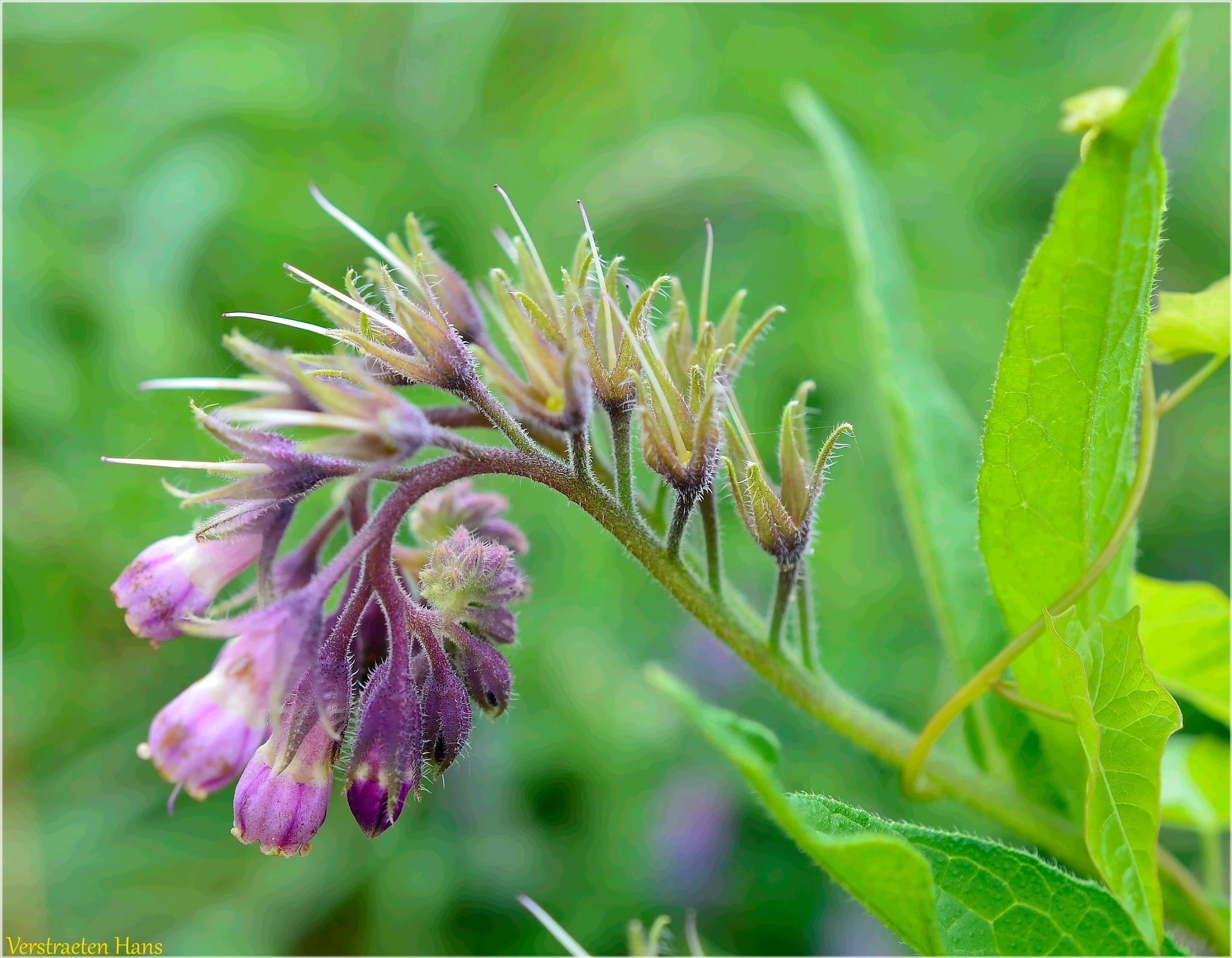 Wild Flower by zard319