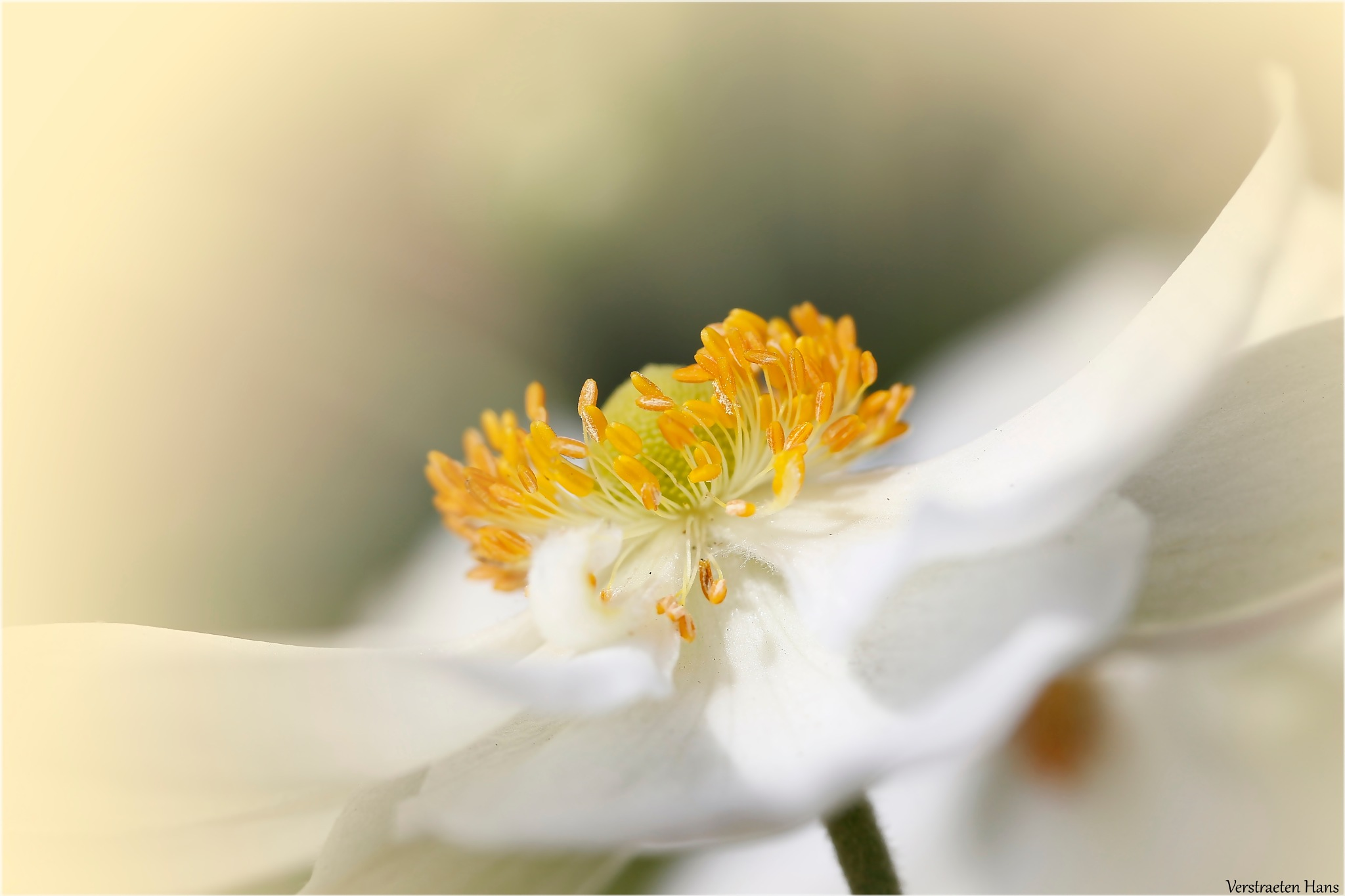 White by zard319