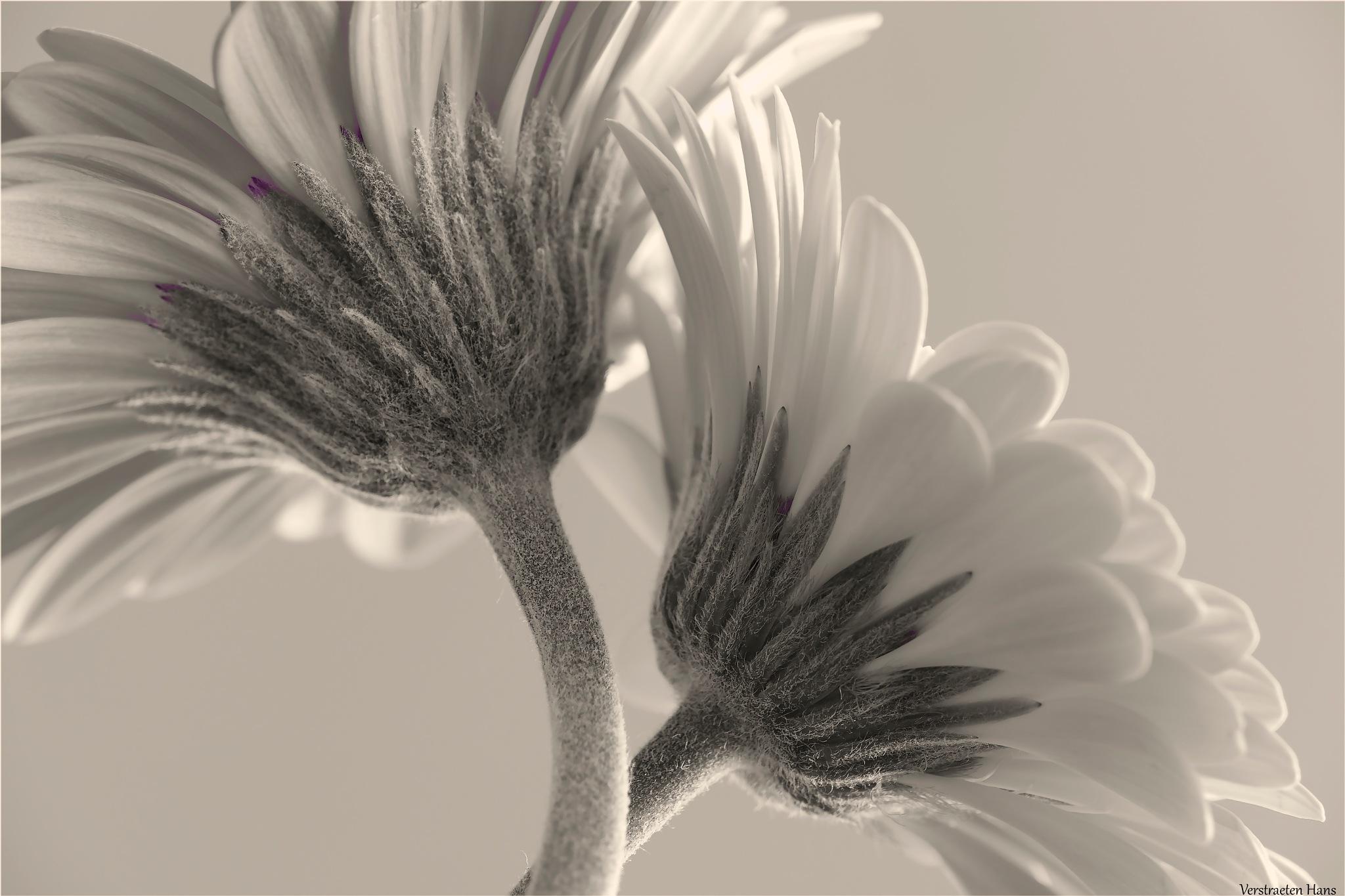 Bright white by zard319