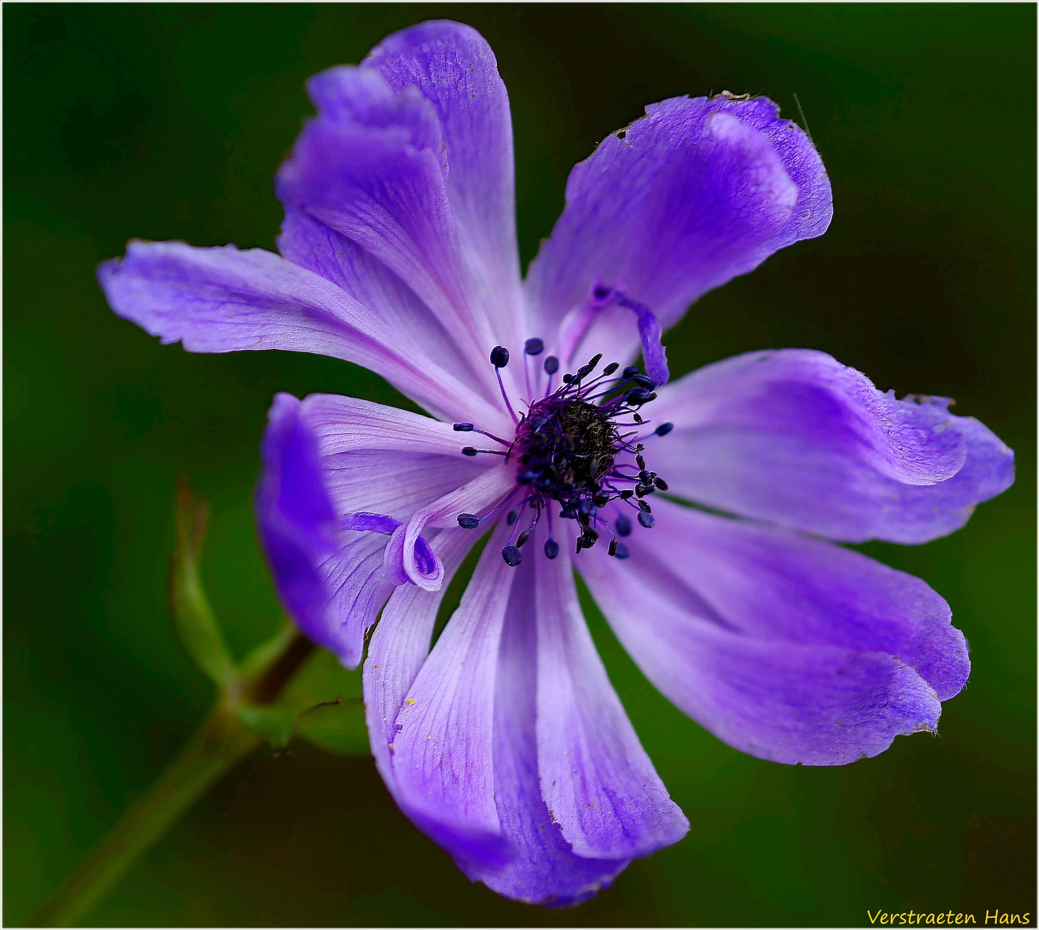 Photo in Macro #flower #macro #nature