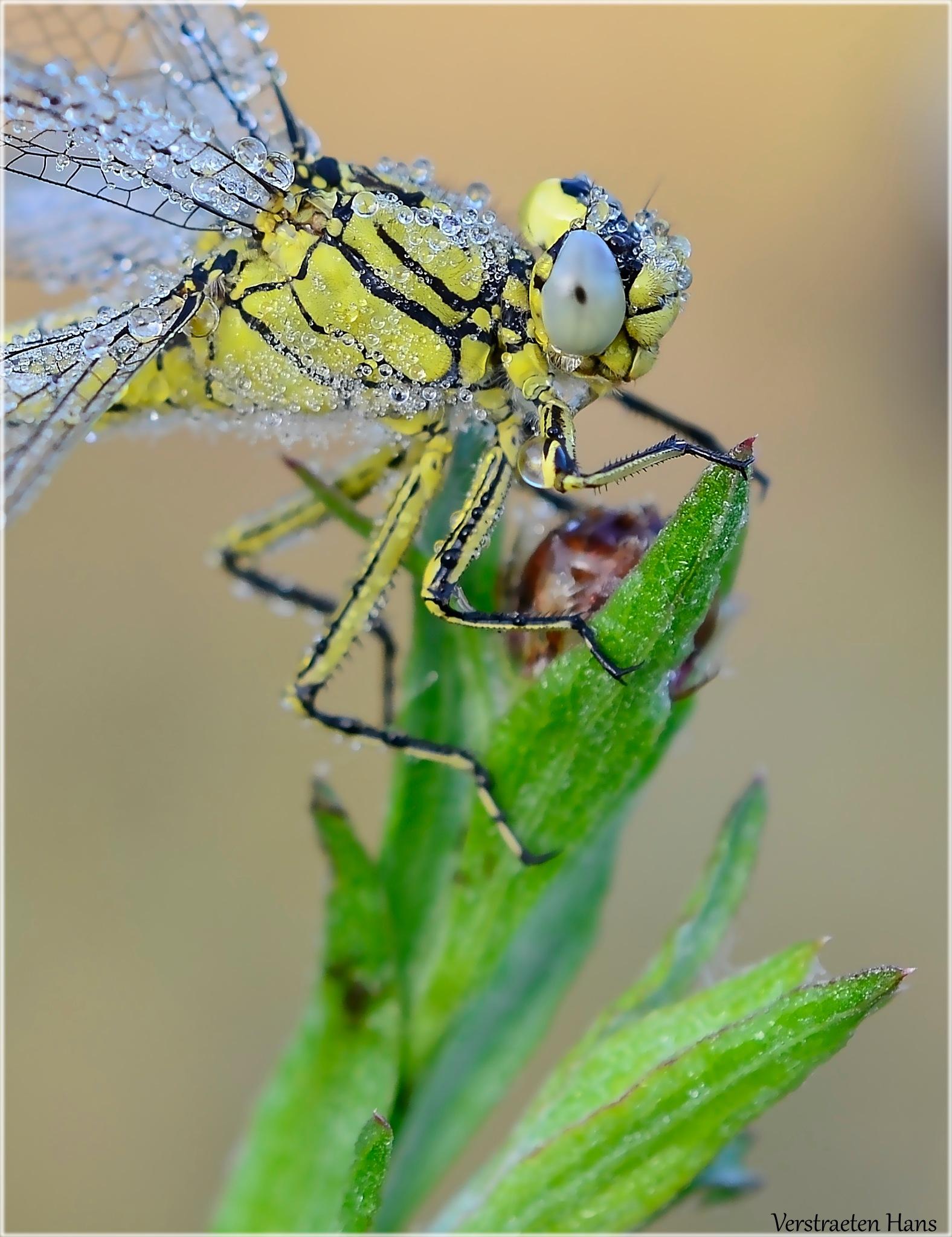 Dewdrops by zard319