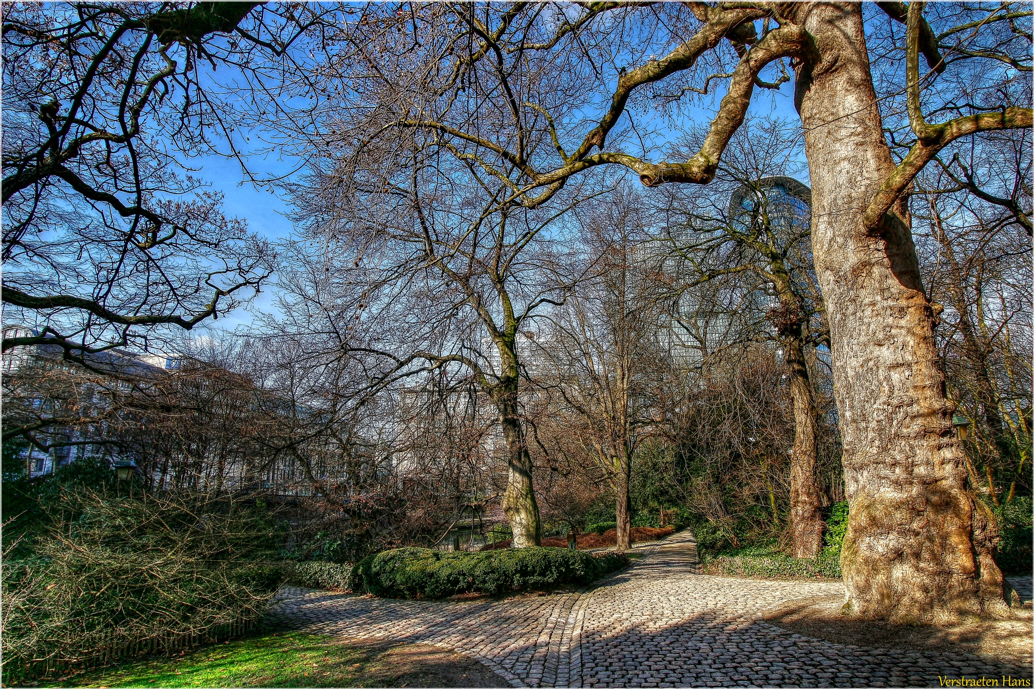 Trees in the parc by zard319