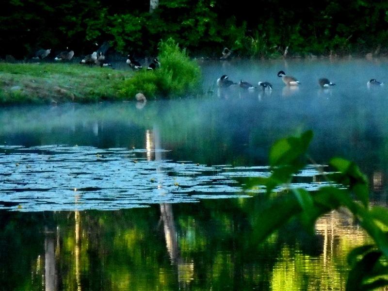 misty morn... by Munica