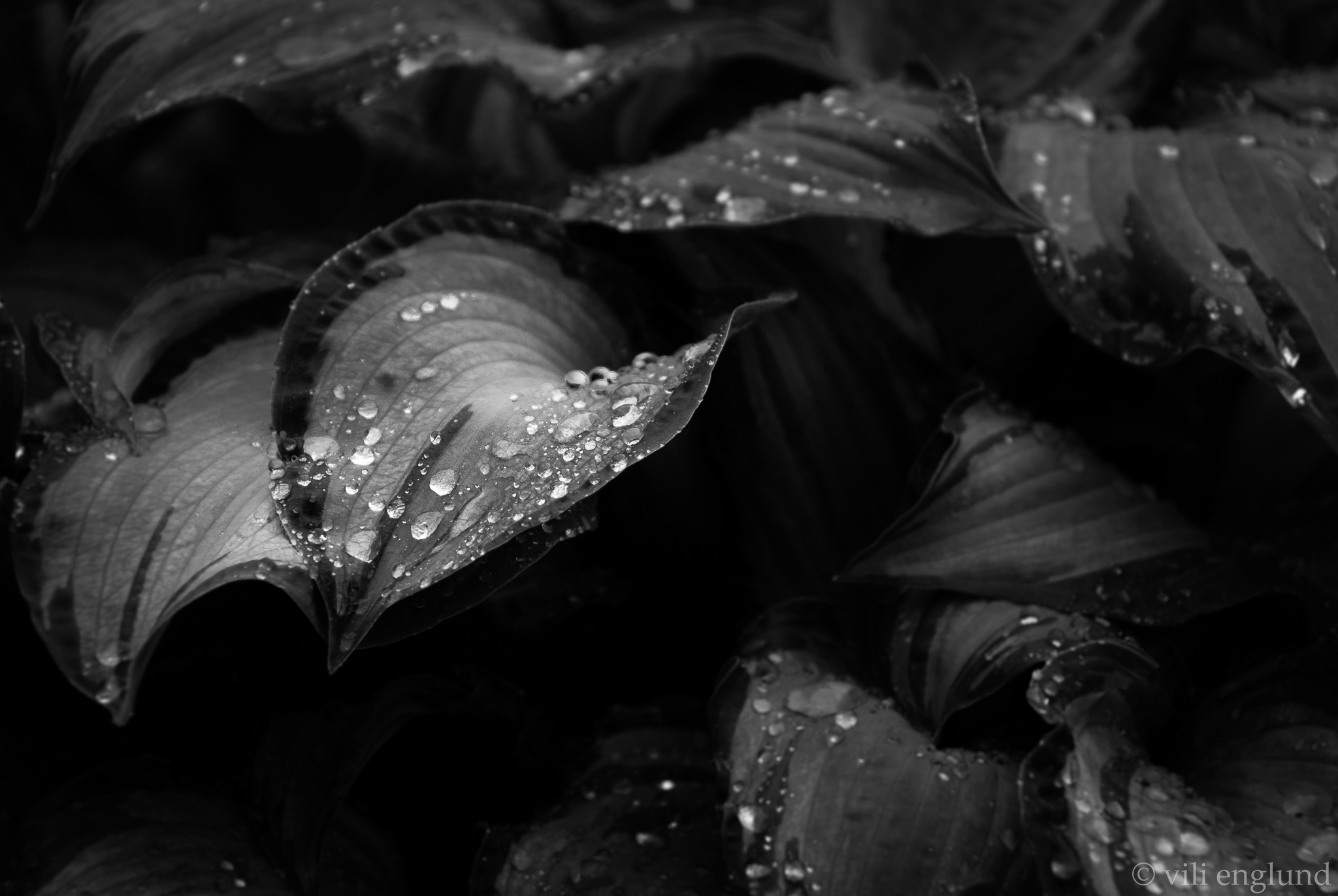 Drops by Vili Englund