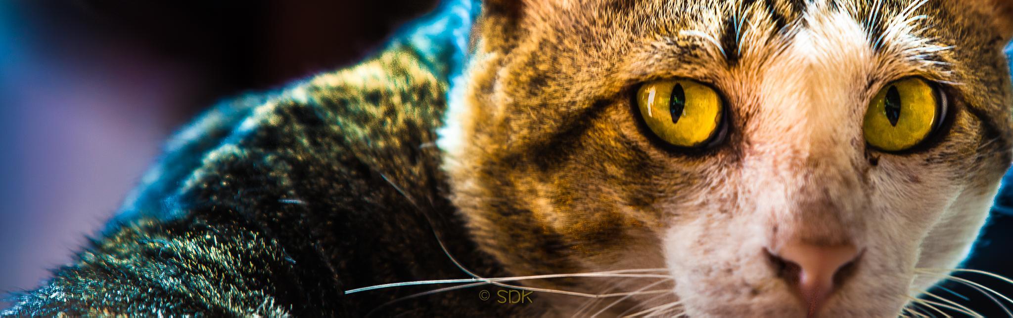 cat by sarochdankul