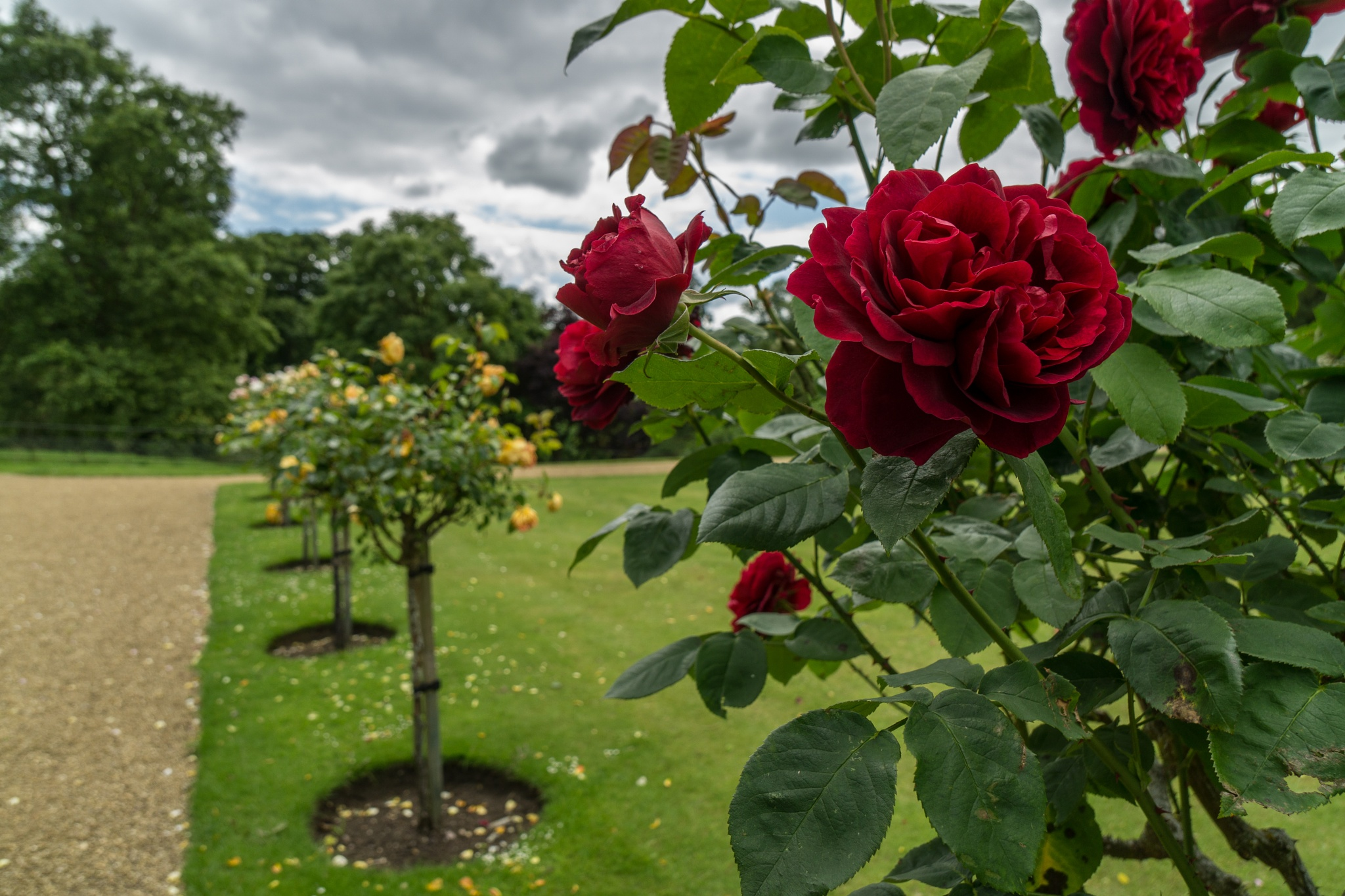 Roses all the way by D Whitehead