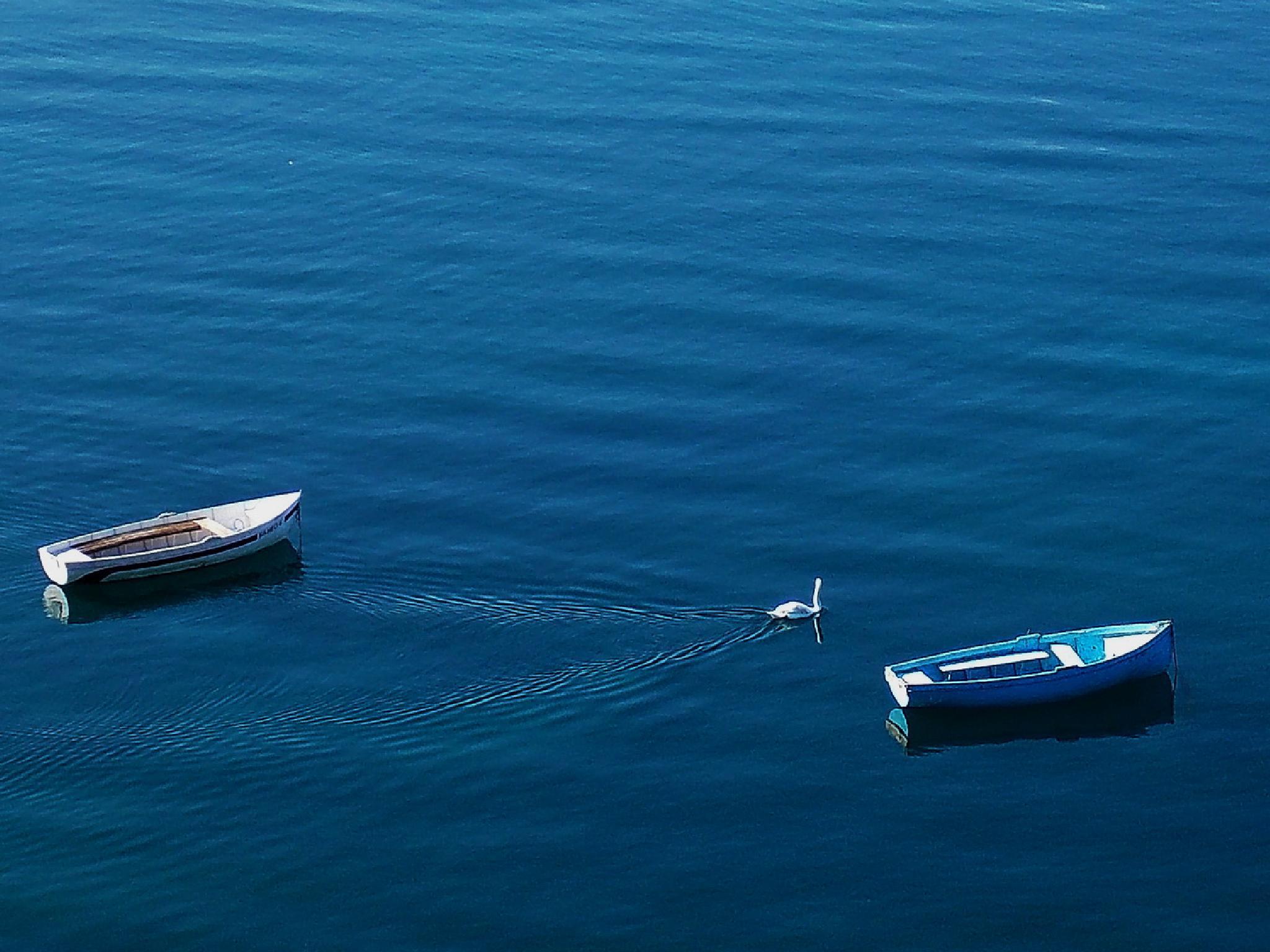 lake, boats, swan by vlado žura