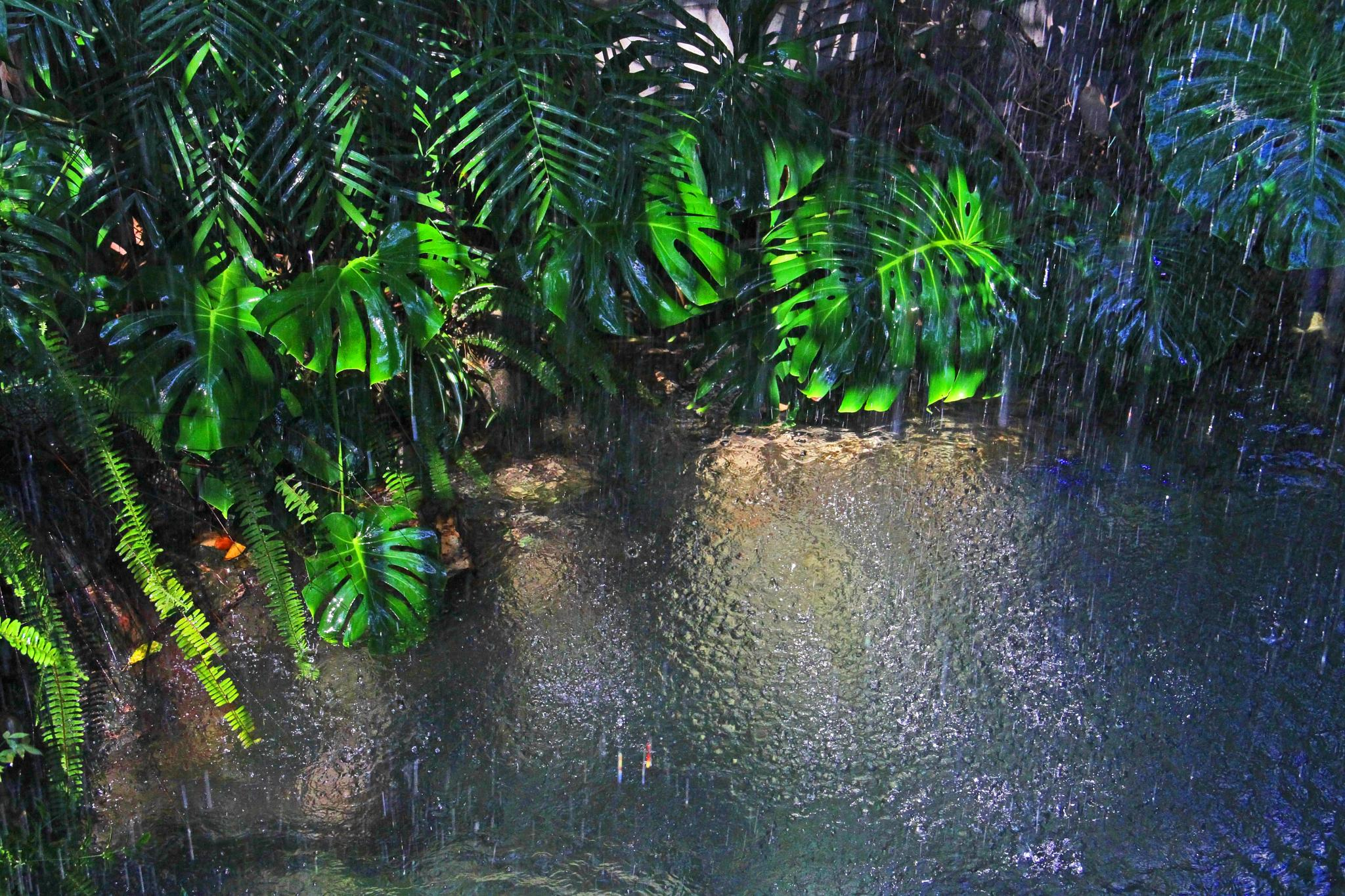 Rain Forest by king.chester0