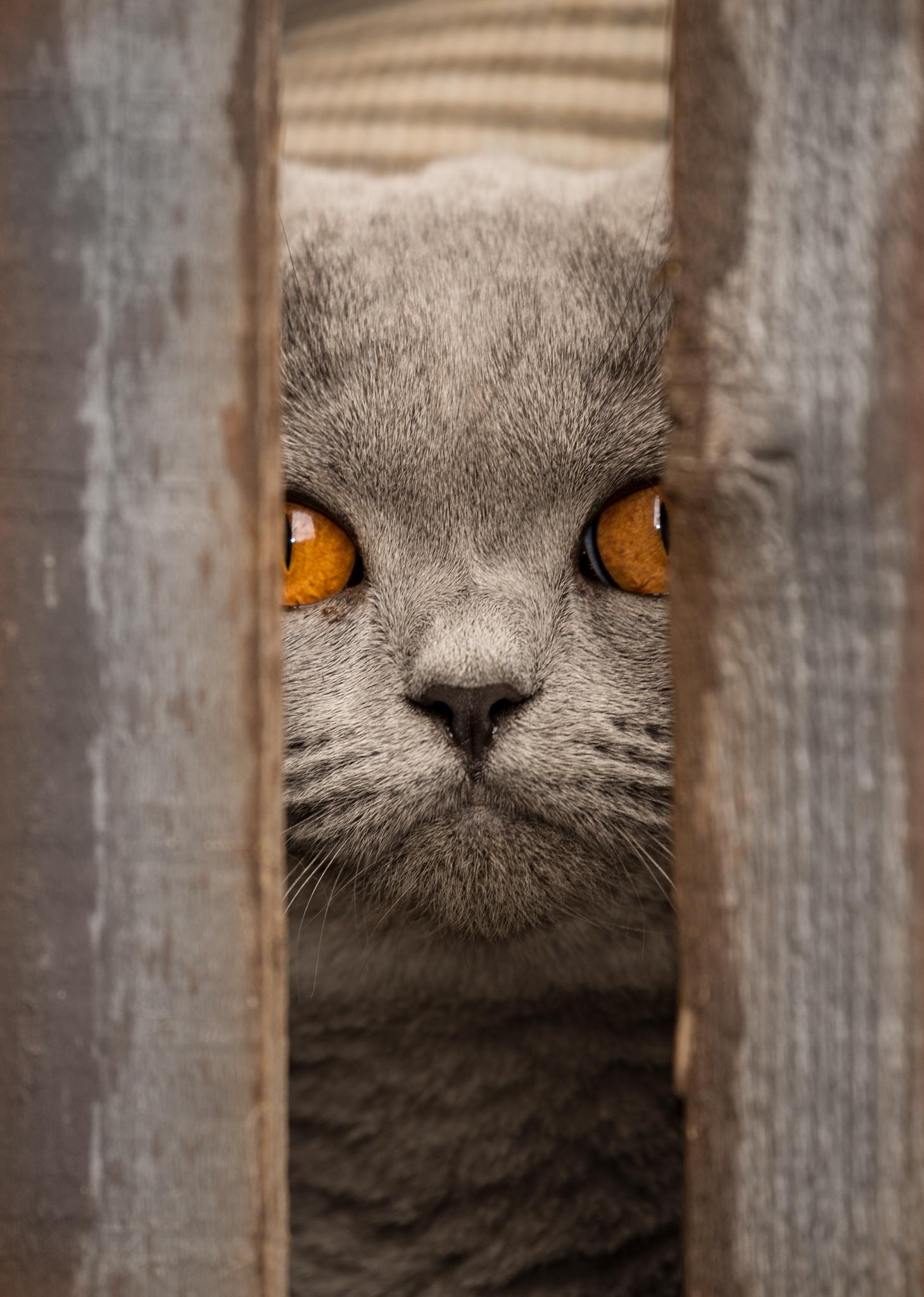 The Cat Next Door by Phil Everett
