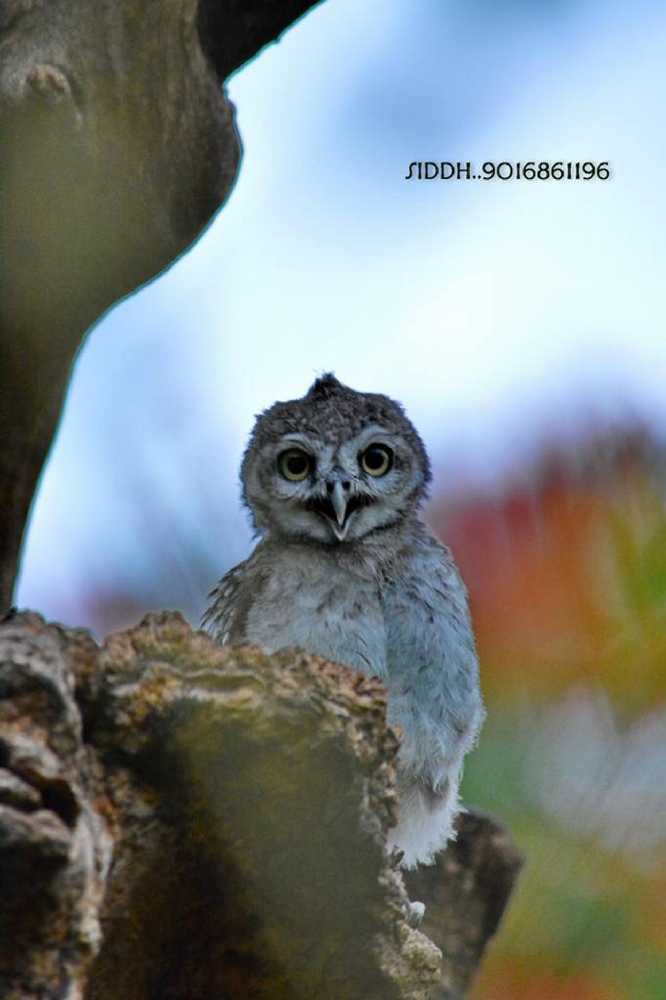 owl01 by siddharthrathod2007
