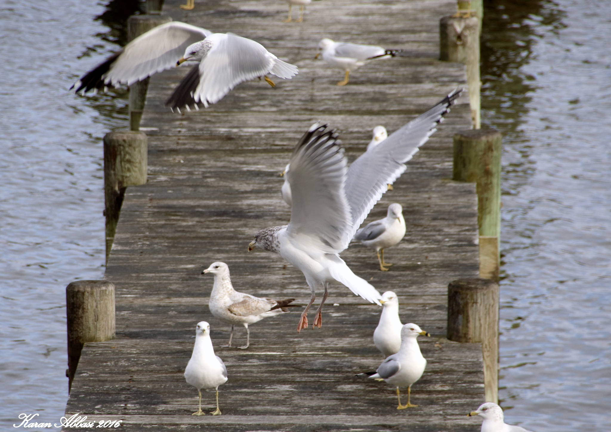 Seagulls on a Pier by Purely Inspired by Karan