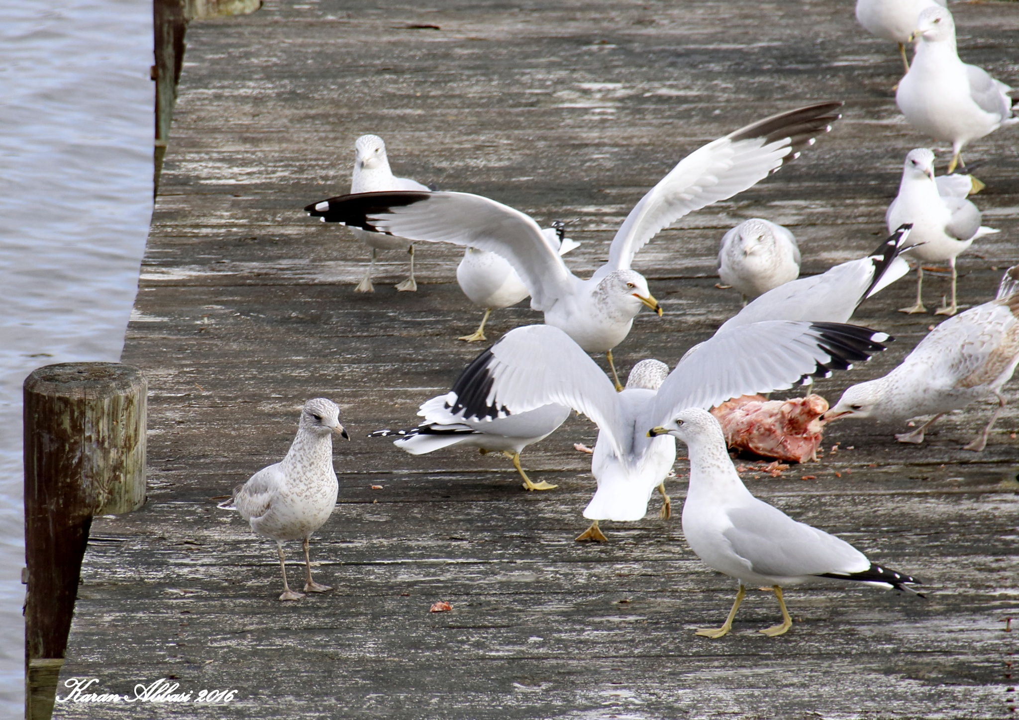 Seagulls and a ham bone by Purely Inspired by Karan