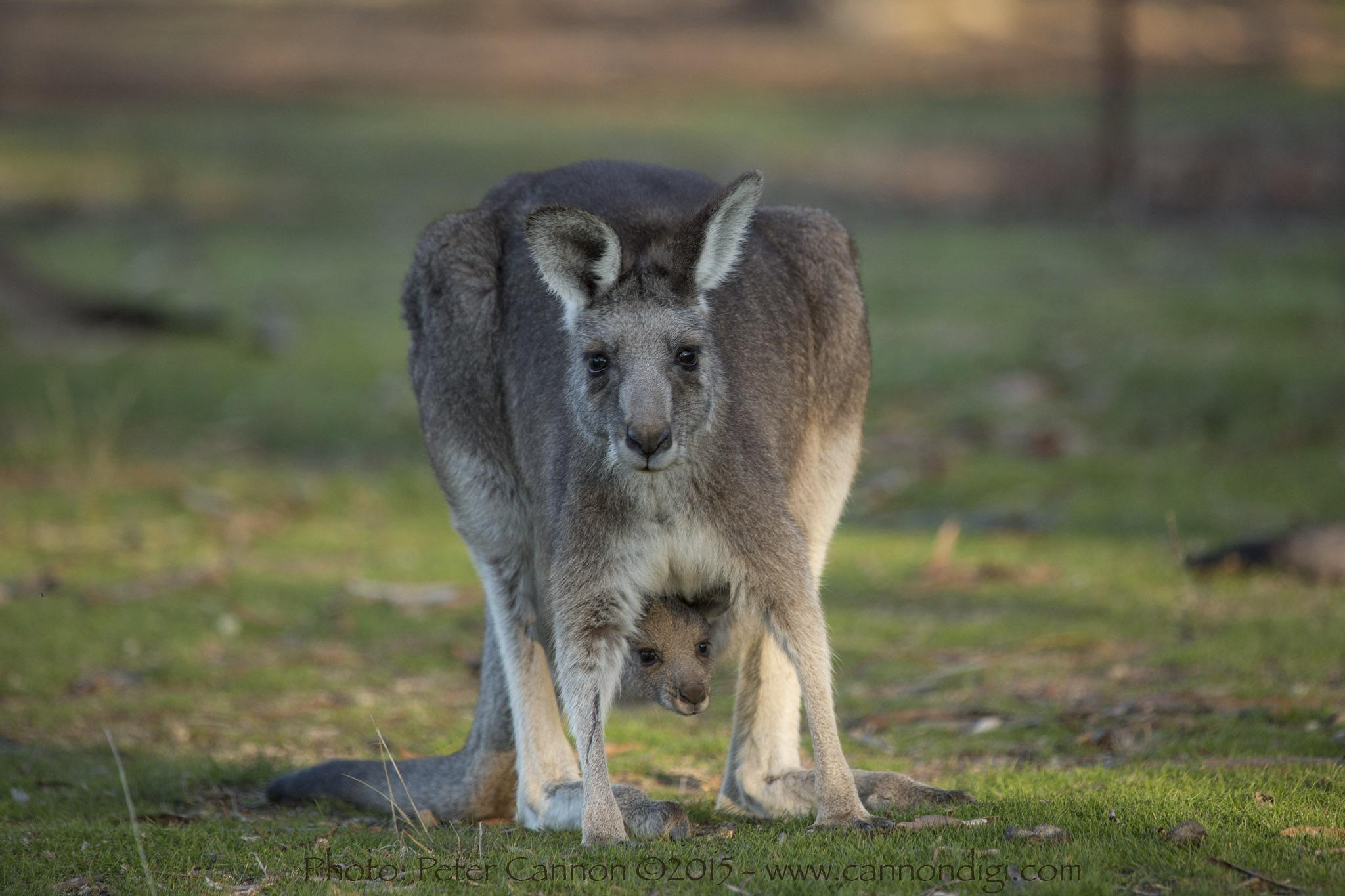 Mother and Baby by Peter Cannon