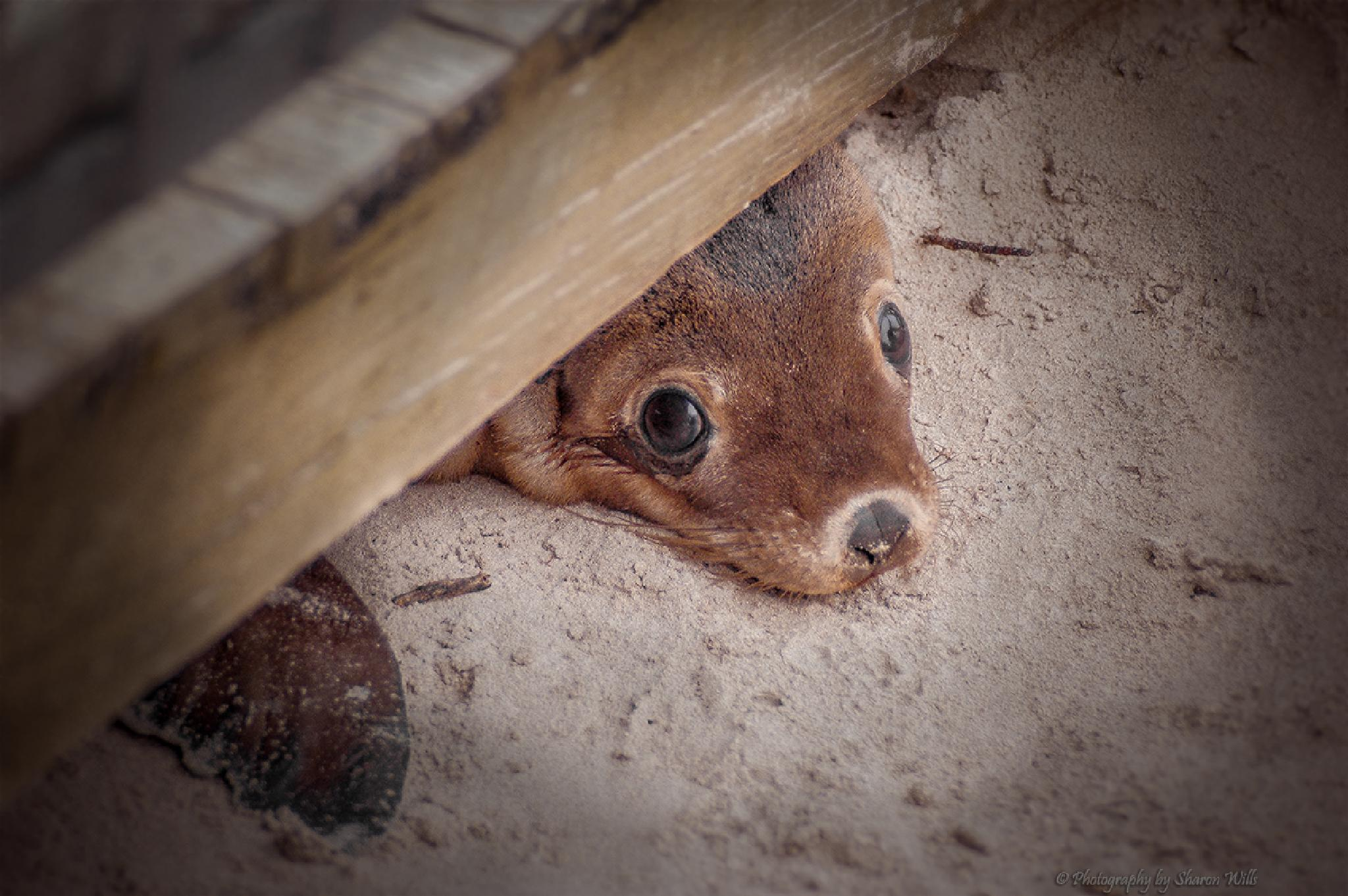 Puppy Dog Eyes by Sharon Wills
