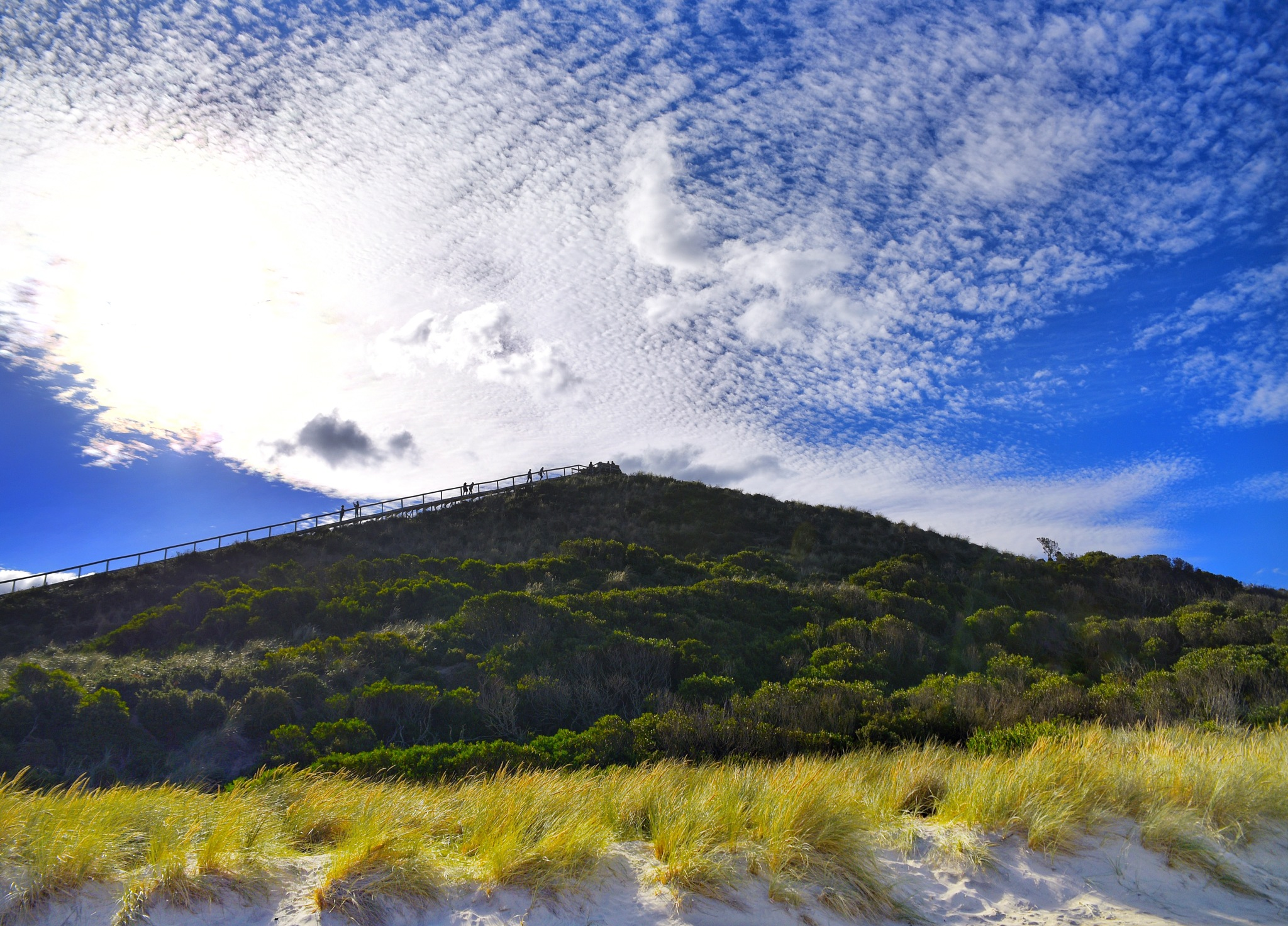 The Neck Bruny Island by Theresa Duong