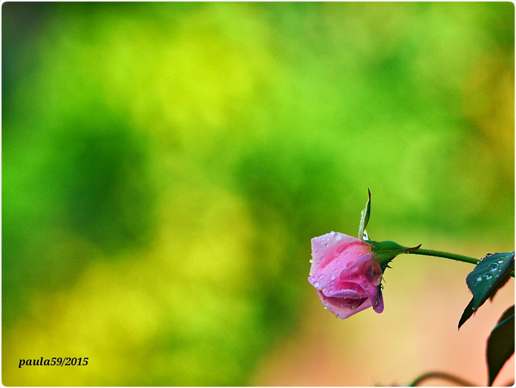Untitled by agraviadorpaul