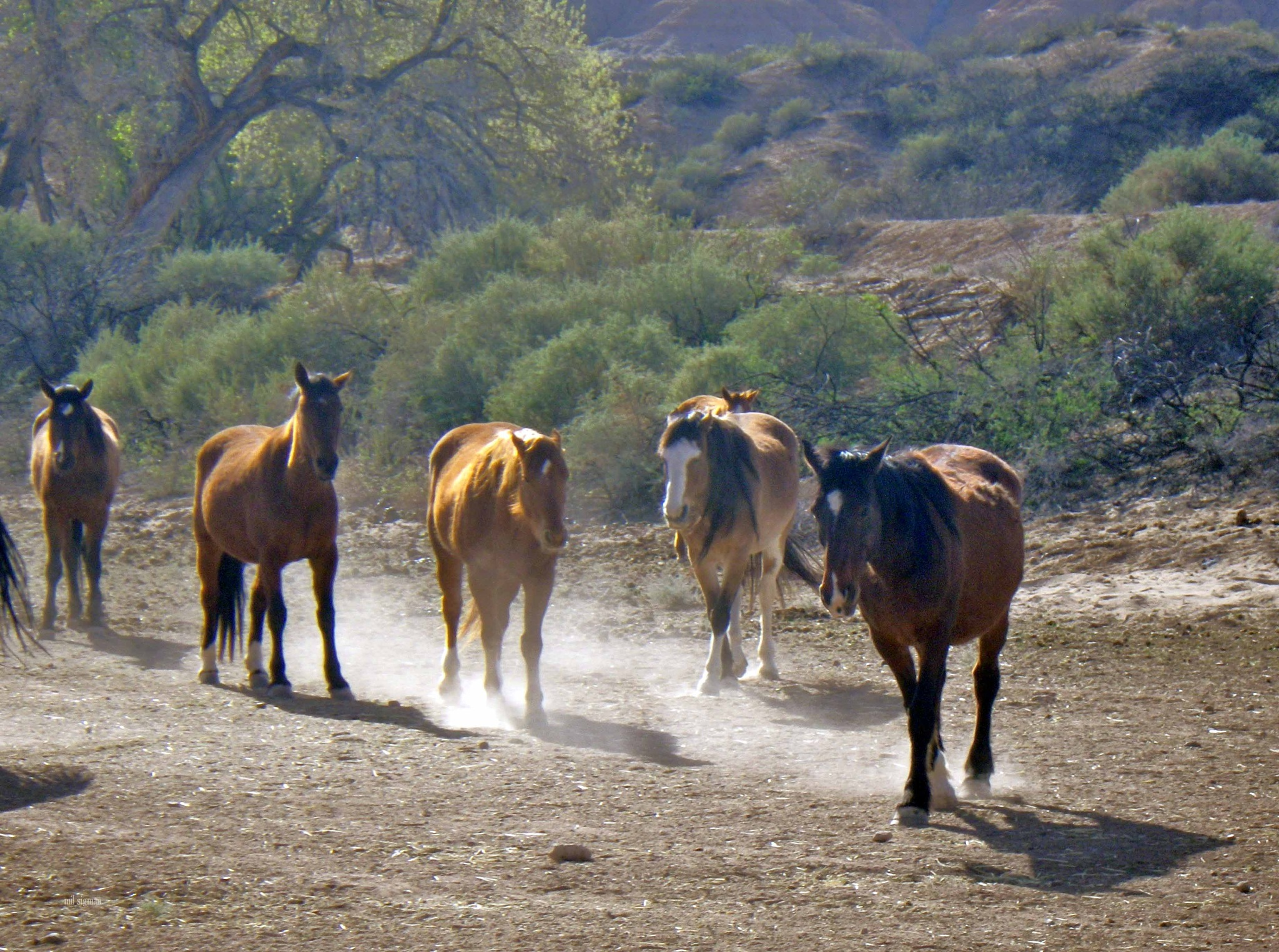 Horses stirring up dust  by milled98