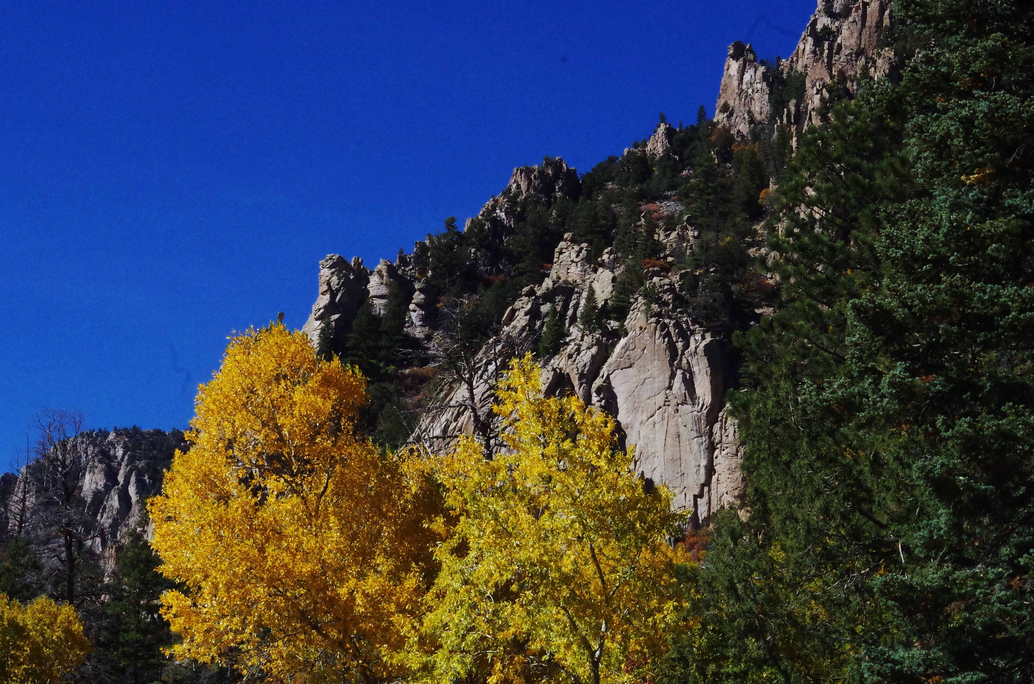 Cimarron Canyon  by milled98