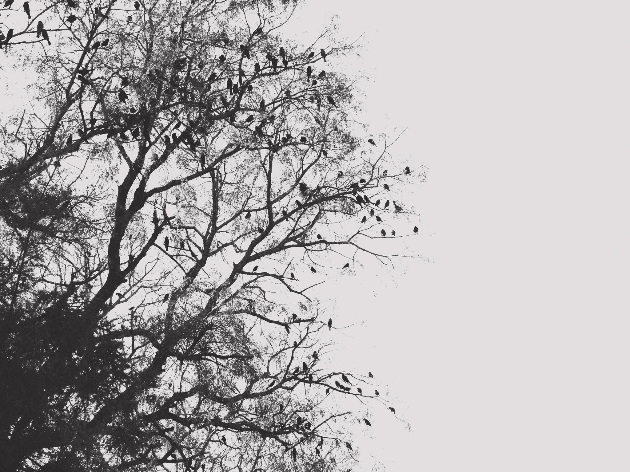 Birds by Marcia Sleiman